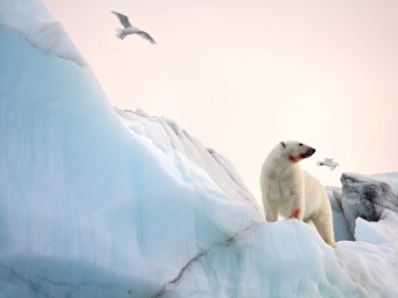Adventure snow outdoor arctic ice Nature sky flightless bird arctic ocean polar ice cap freezing ice cap glacial landform polar bear beak sea ice Bird winter storm day