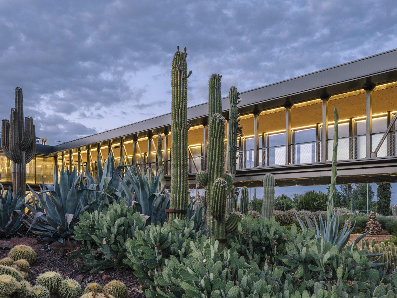 Offbeat Style + Design Travel Trends plant sky outdoor cactus landscape facade tree