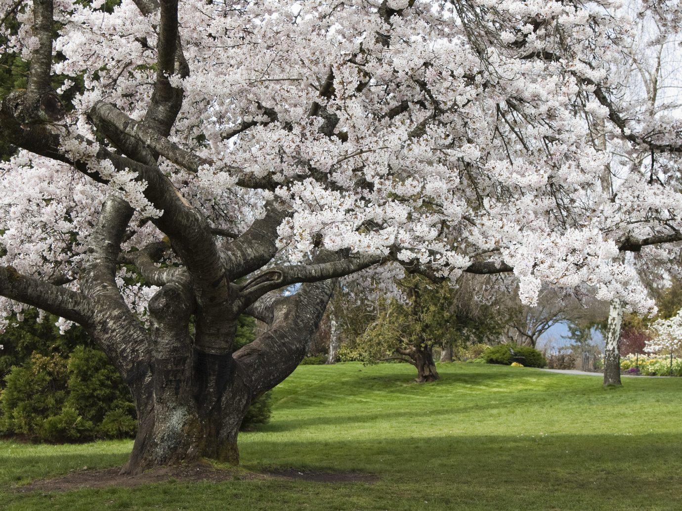 Offbeat tree grass outdoor flower plant field blossom cherry blossom botany park spring oak lush