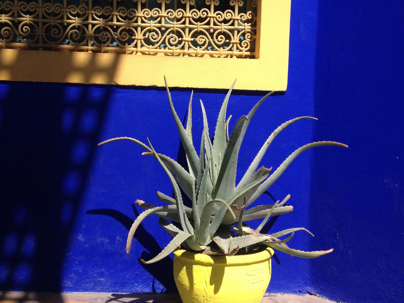 Trip Ideas color blue yellow night art flower lighting glass plant