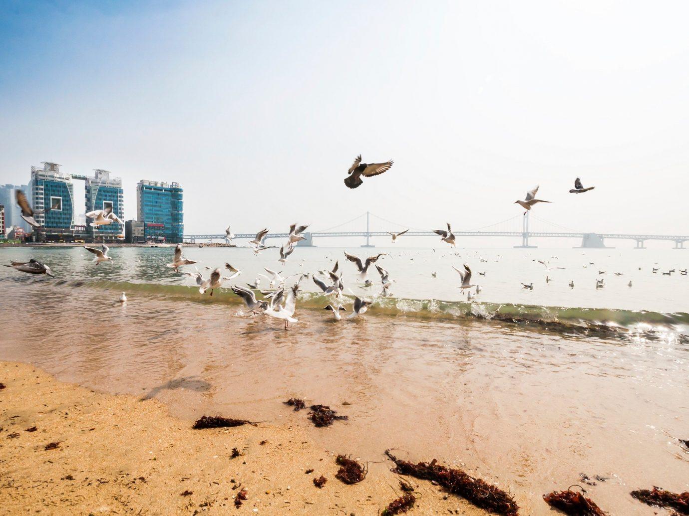 Travel Tips sky outdoor Beach shore Sea water Coast Ocean Nature sand wave flock bay mudflat several sandy