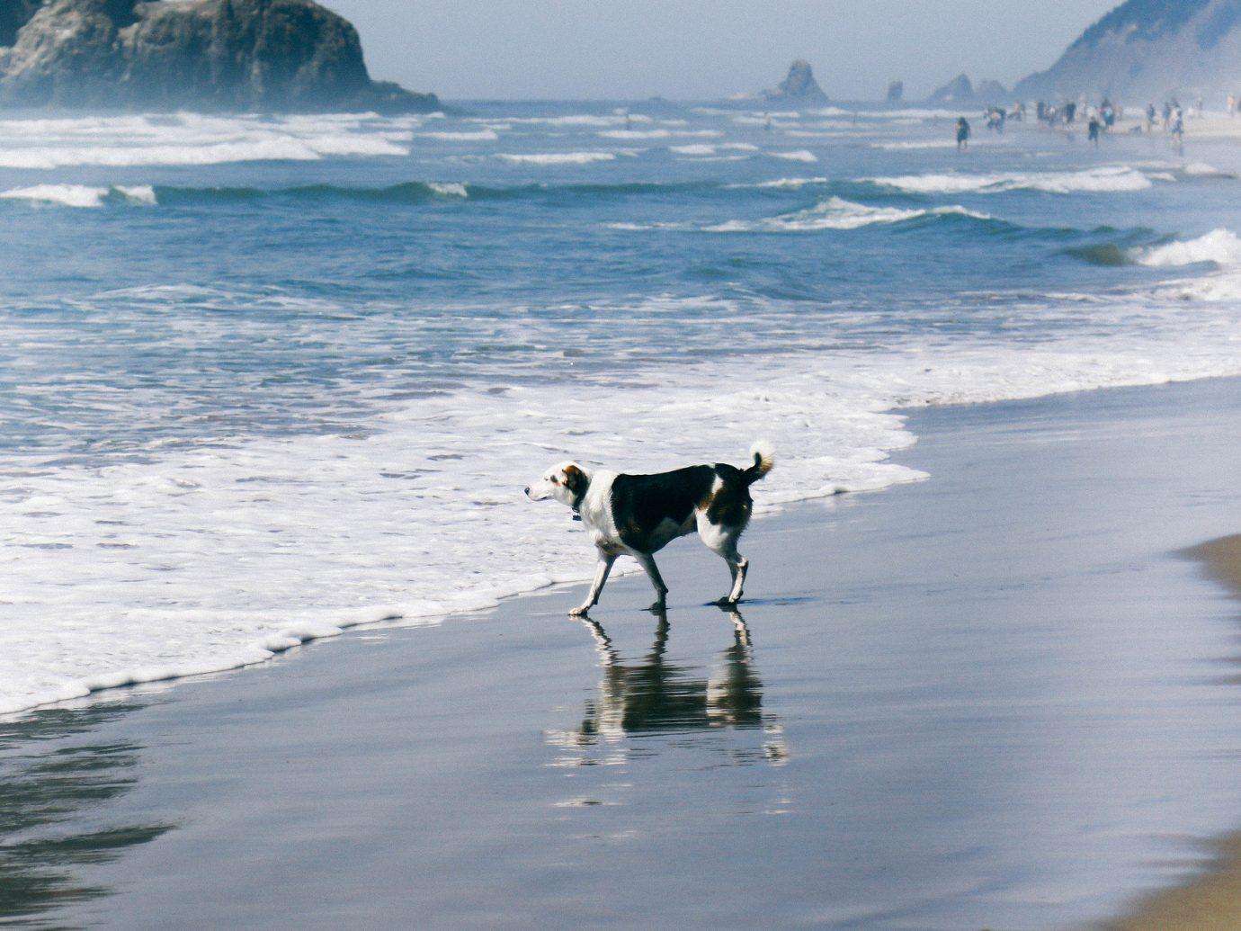 Road Trips Trip Ideas water outdoor Beach Sea Ocean Coast shore body of water Dog wave wind wave black arctic ice dog like mammal