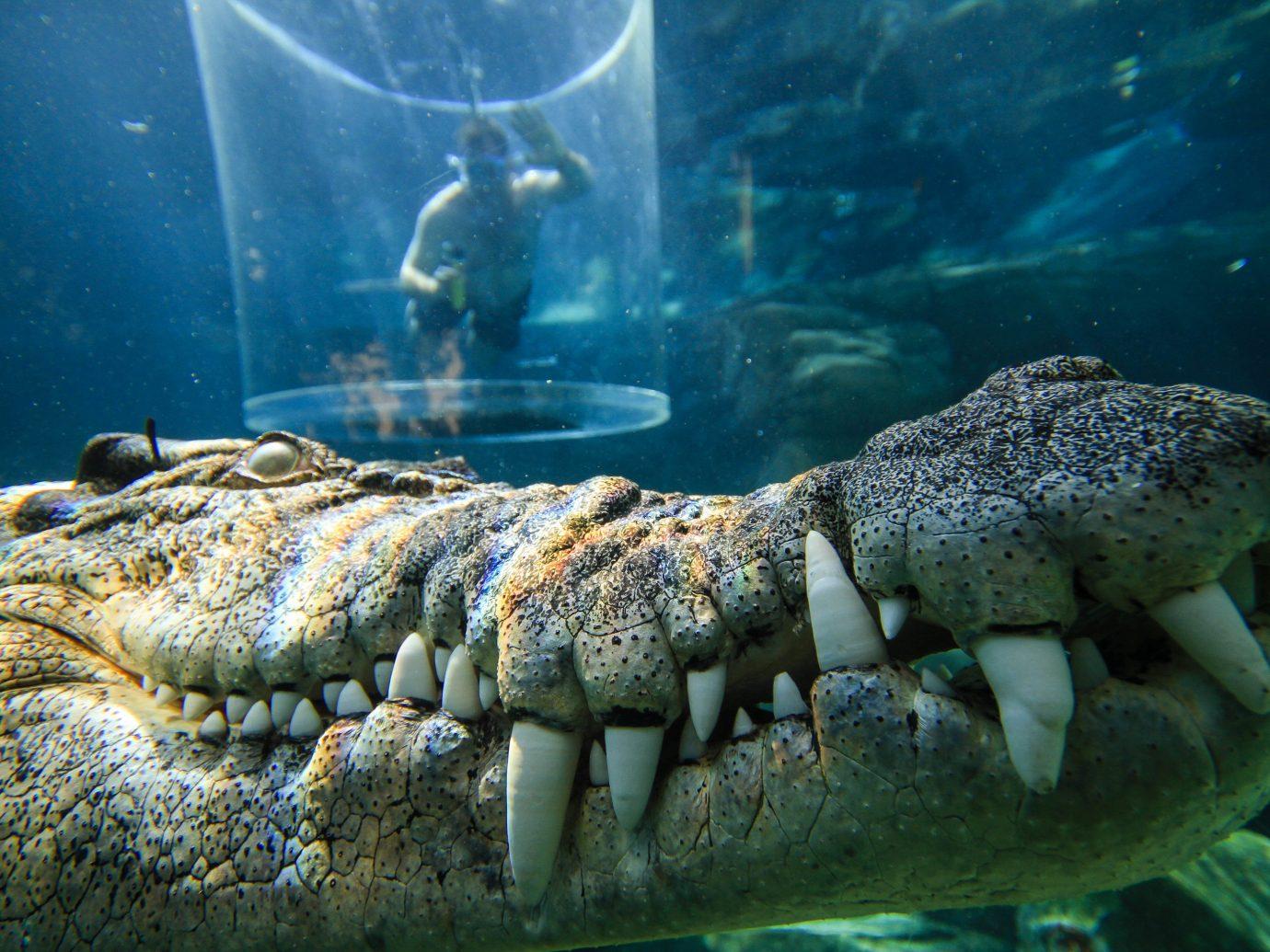 Trip Ideas animal crocodilia water underwater marine biology organism crocodile reptile alligator fish