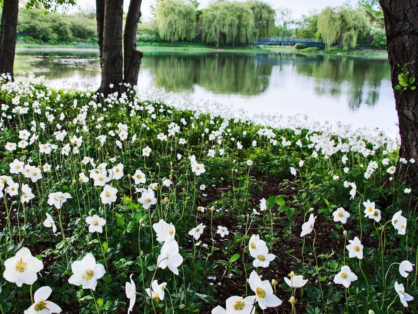 Offbeat tree outdoor flower water Nature Lake flora plant botany land plant River Garden meadow woodland flowering plant surrounded wildflower bushes pond