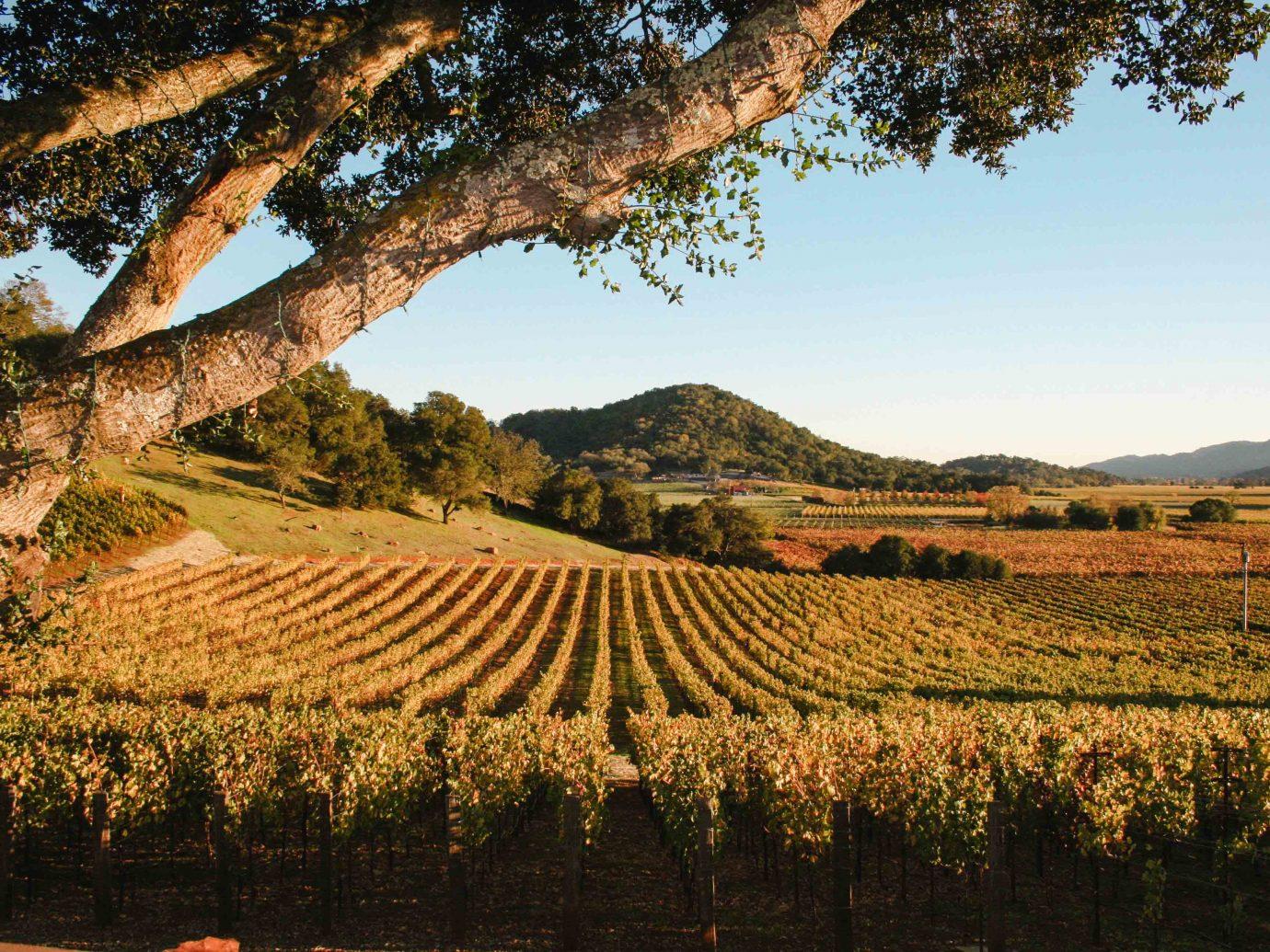 Calistoga Ranch Winery