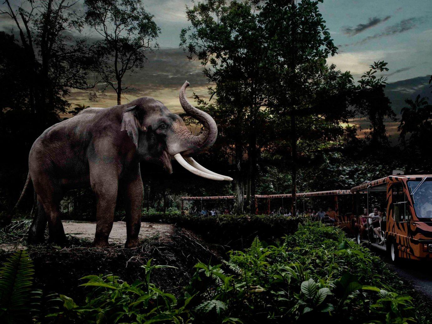 Arts + Culture Singapore Southeast Asia Trip Ideas tree outdoor elephant elephants and mammoths Wildlife wilderness tusk plant indian elephant standing Forest grass national park Jungle landscape sky Safari dirt