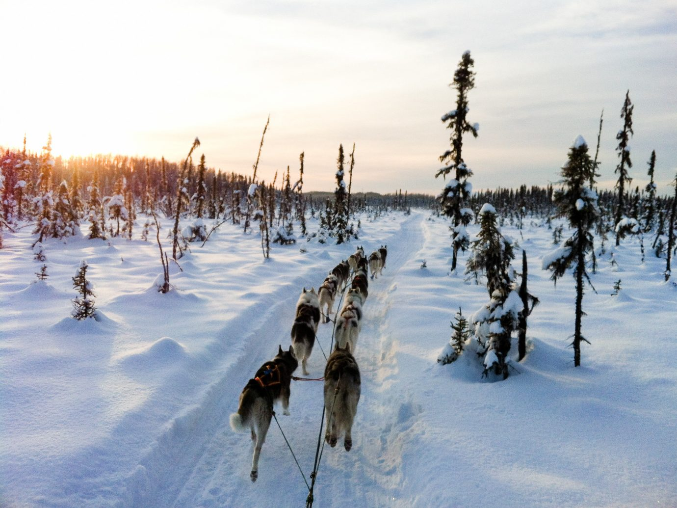 Winter snow tree freezing arctic sky geological phenomenon ice frost dog like mammal tundra