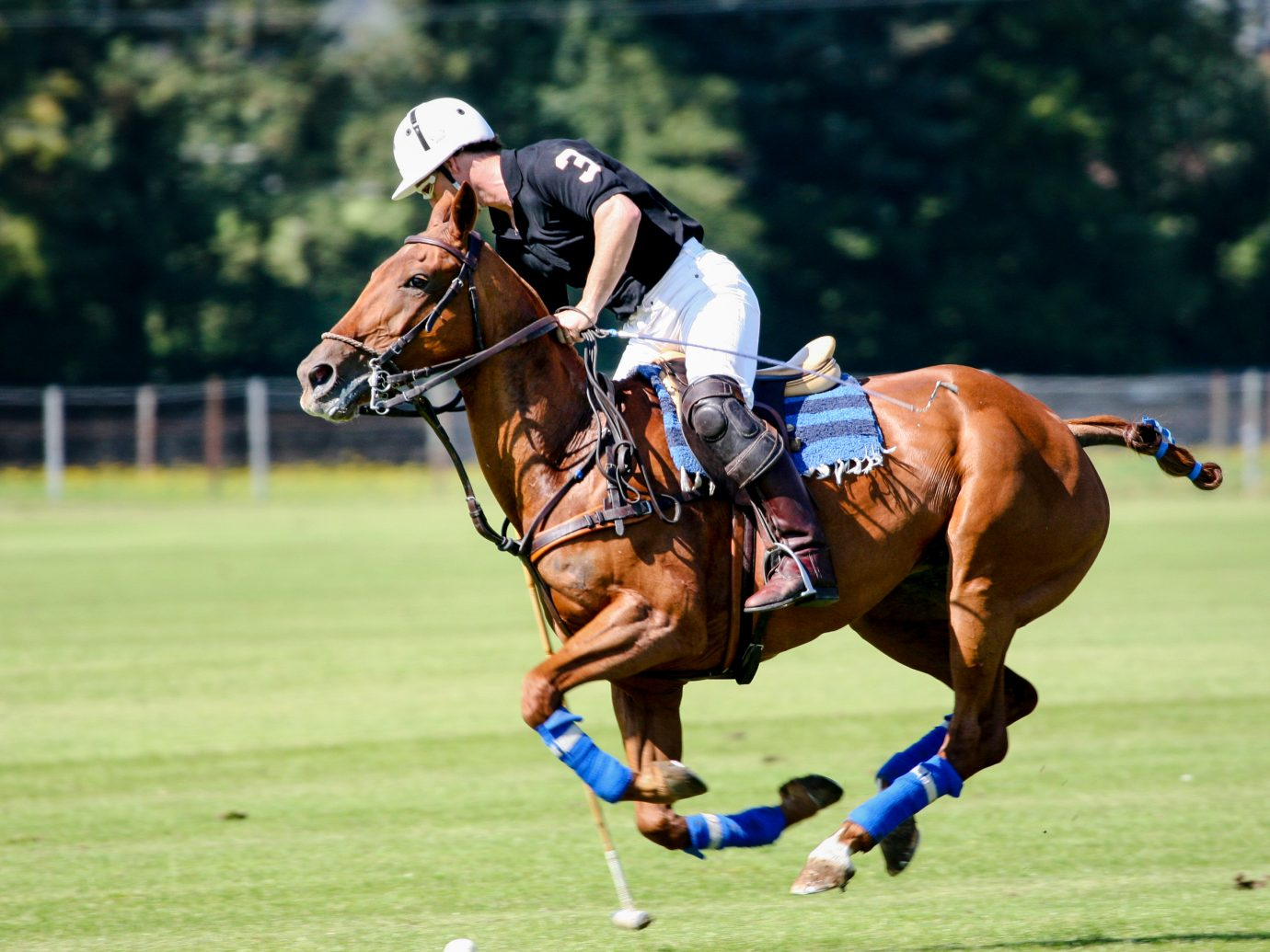 Equestrians playing polo