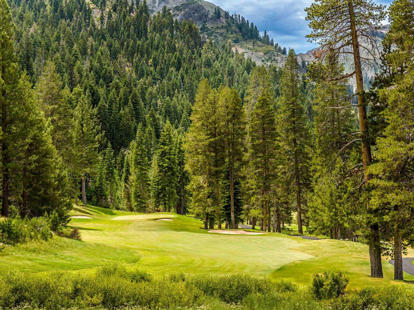 Lake Tahoe greenery