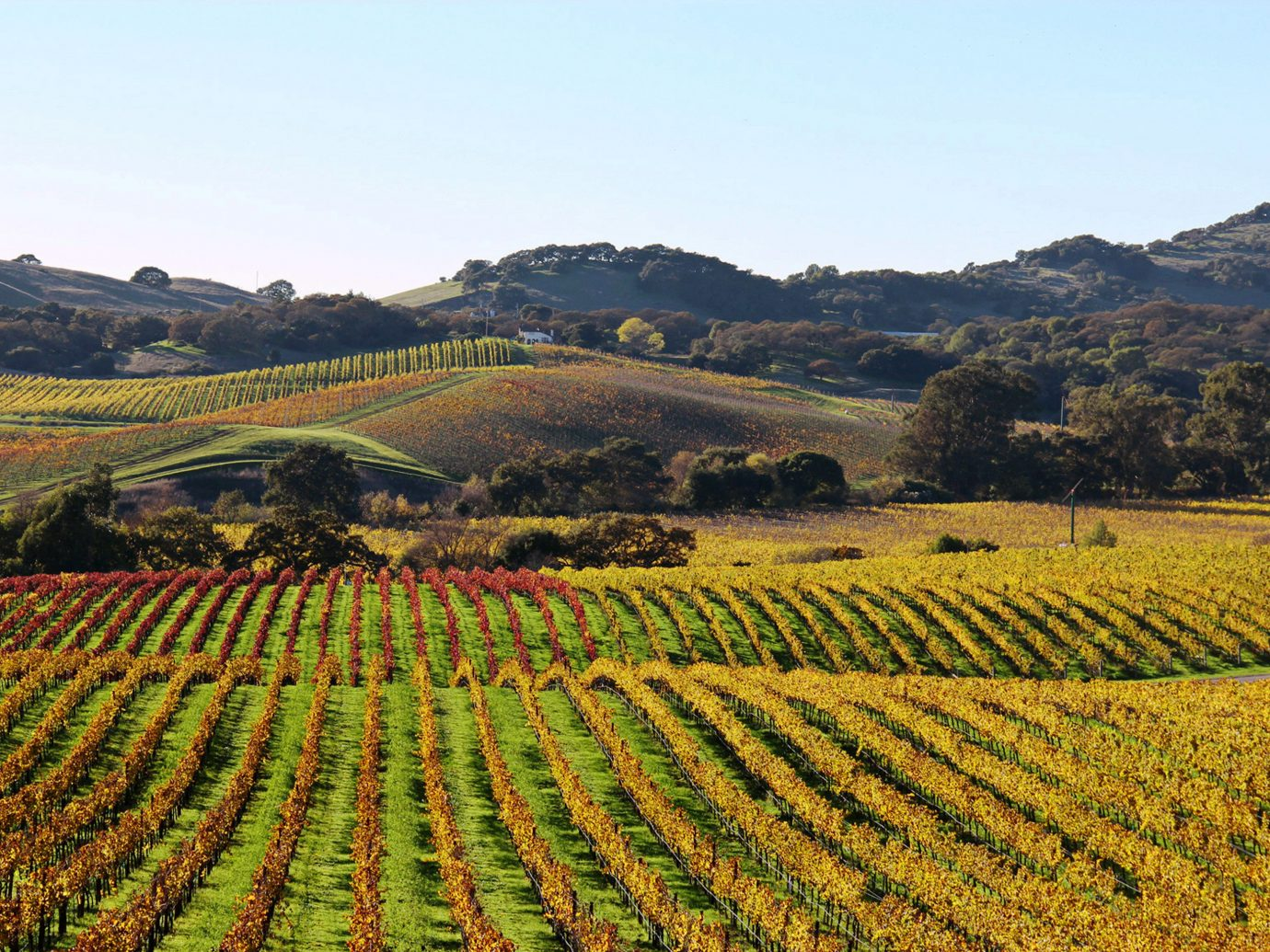 MacArthur Place winery field