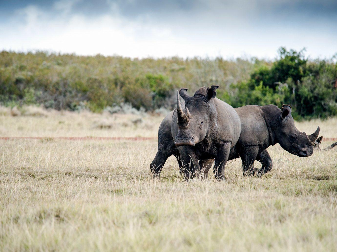 Gondwana Game Reserve; Wildlife grassland ecosystem fauna grass pasture terrestrial animal savanna Safari national park ecoregion steppe grazing mane plain wildebeest landscape shrubland tree prairie sky
