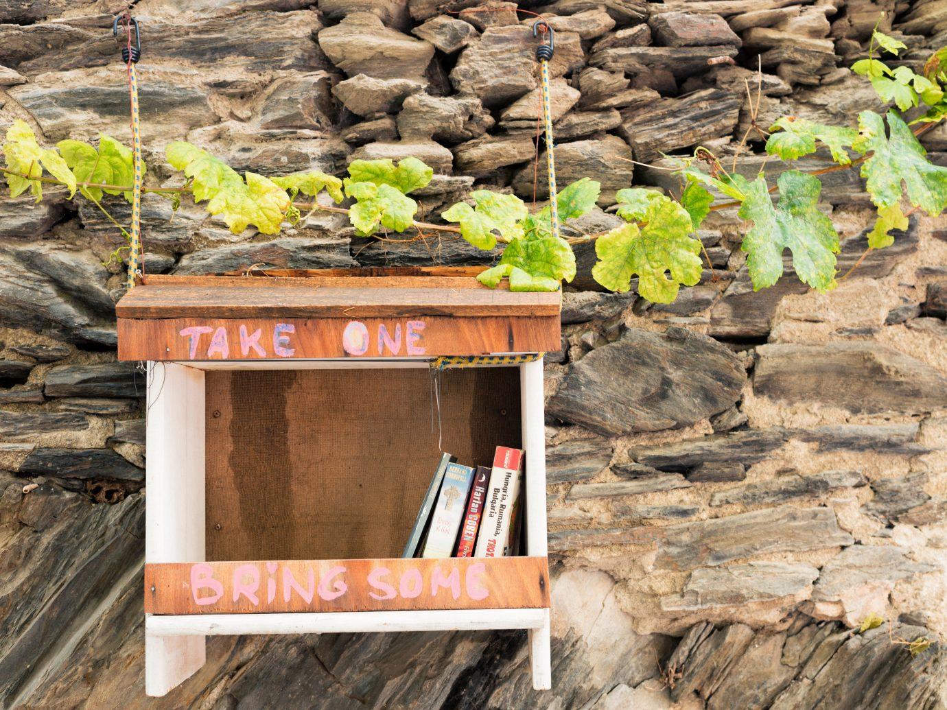europe Spain Trip Ideas plant wood soil flower
