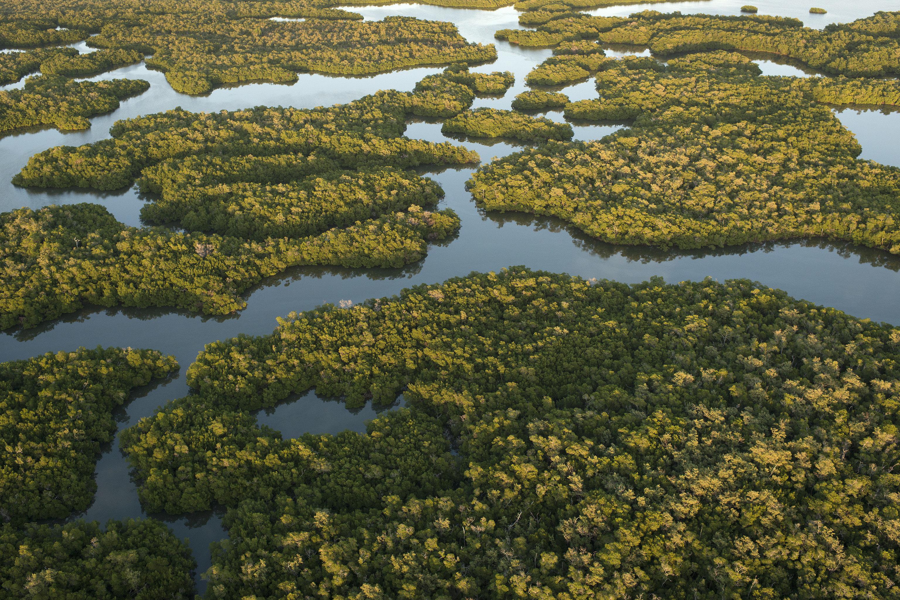 Trip Ideas habitat vegetation outdoor natural environment wilderness tree ecosystem plant tundra wetland River aerial photography flower algae