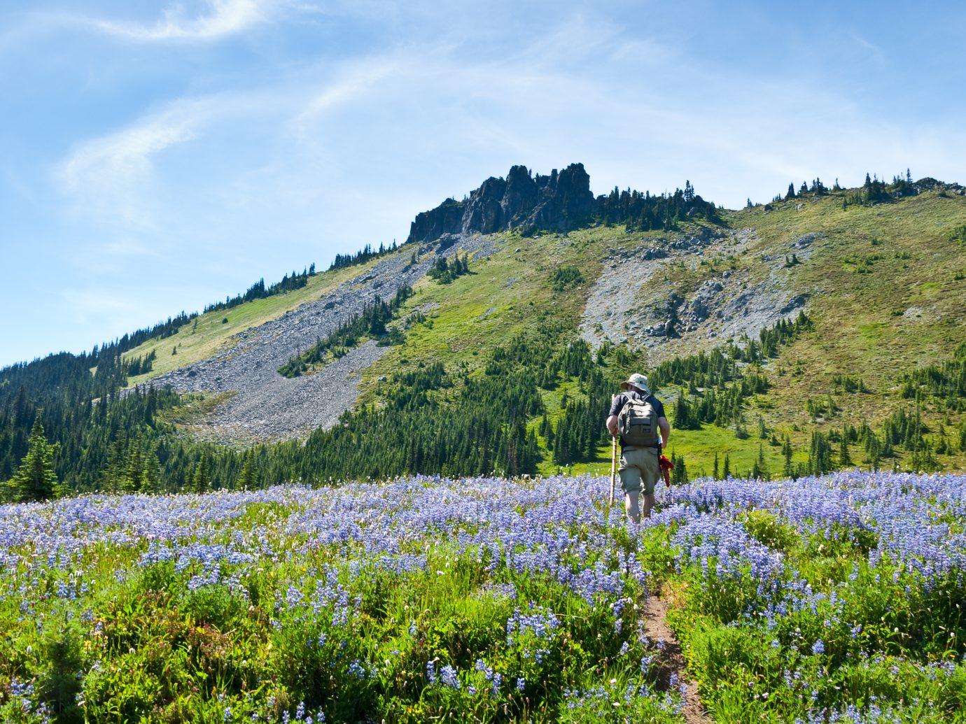 Mount Rainier in Summer