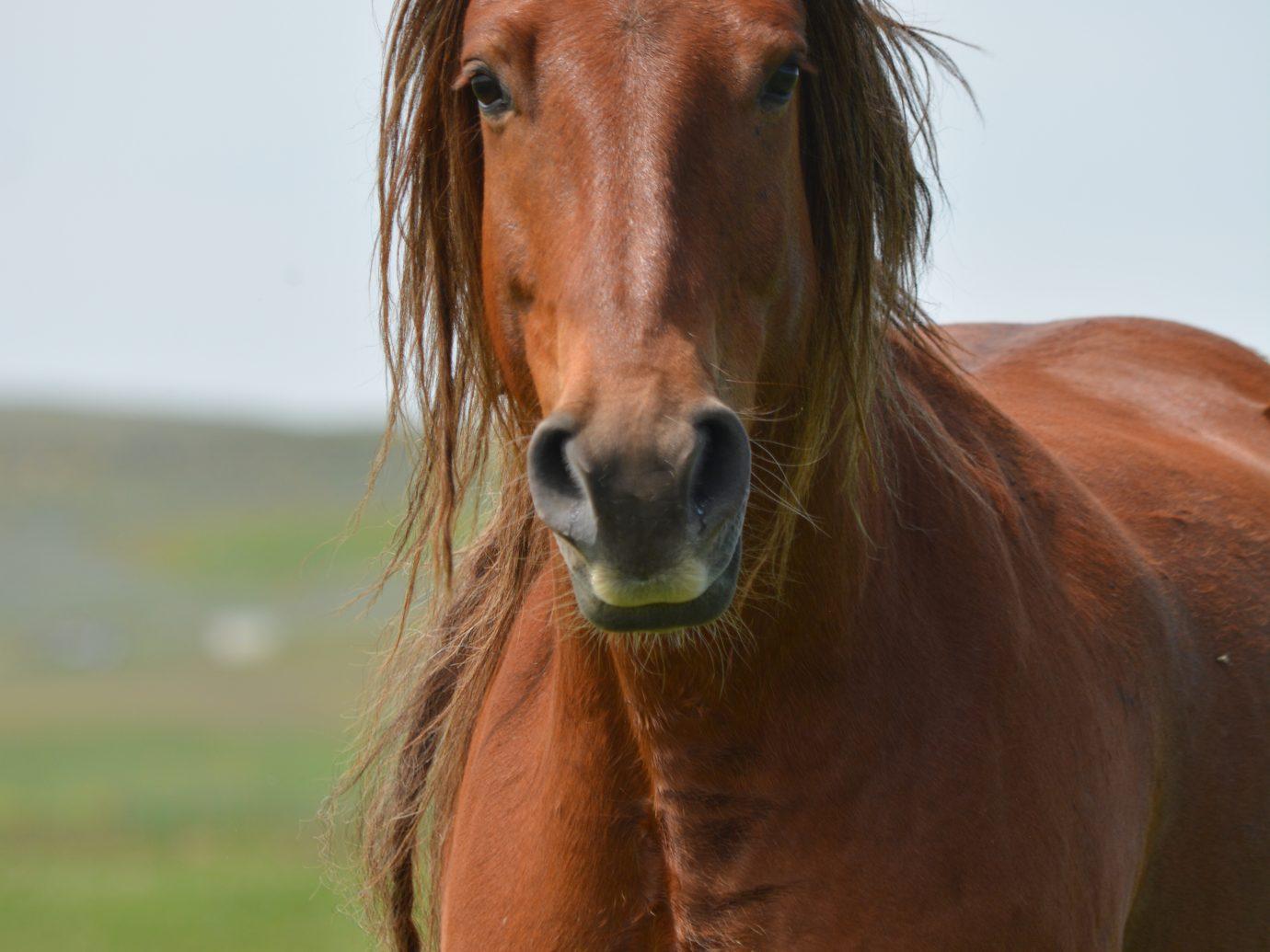 Wind River Wild Horse Sanctuary