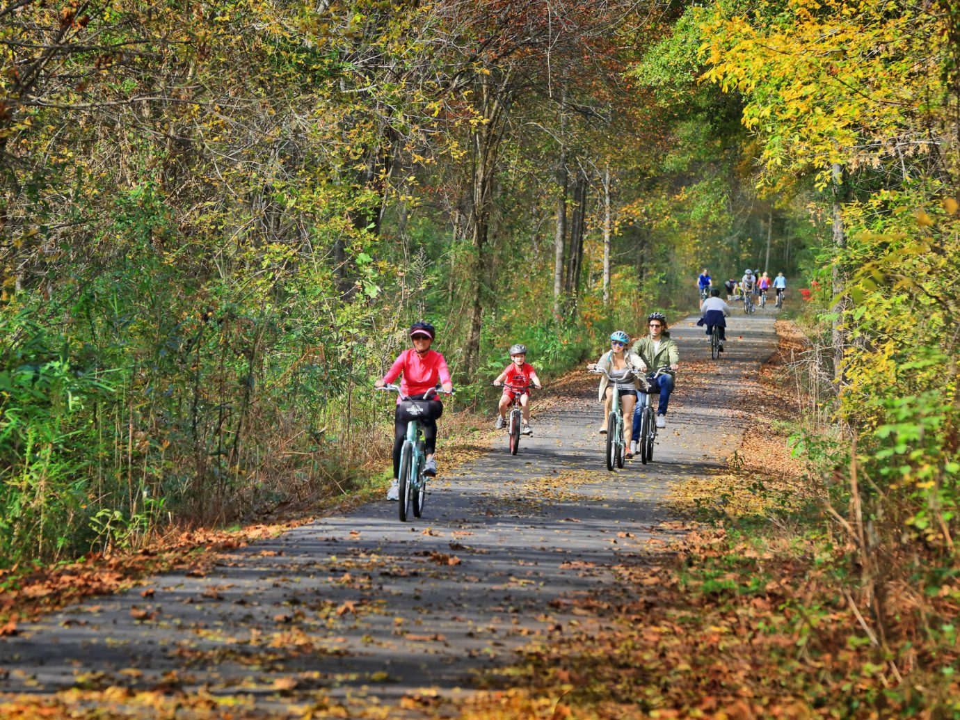activities bikers Bikes Biking calm Greenery leaves mountain biking Nature Outdoor Activities Outdoors path people remote road serene trees Trip Ideas tree outdoor riding grass bicycle trail cycling autumn season sports leaf plant Forest mountain bike woodland walking wooded vehicle wood dirt