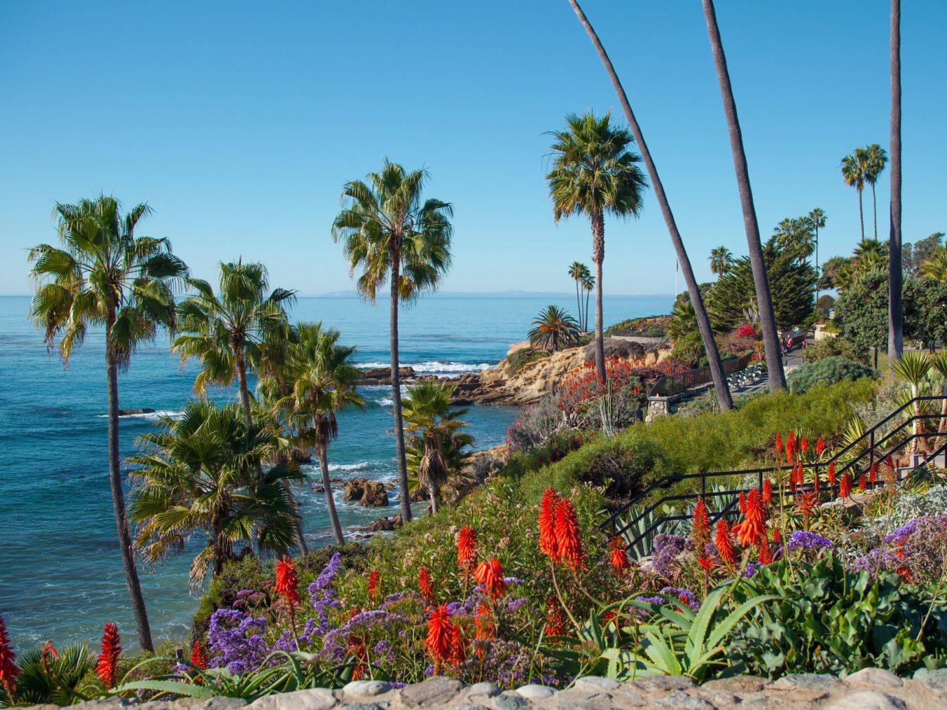 Trip Ideas sky outdoor tree palm flora Beach Coast vacation Sea plant arecales tropics caribbean Ocean bay flower Resort colorful Garden lined