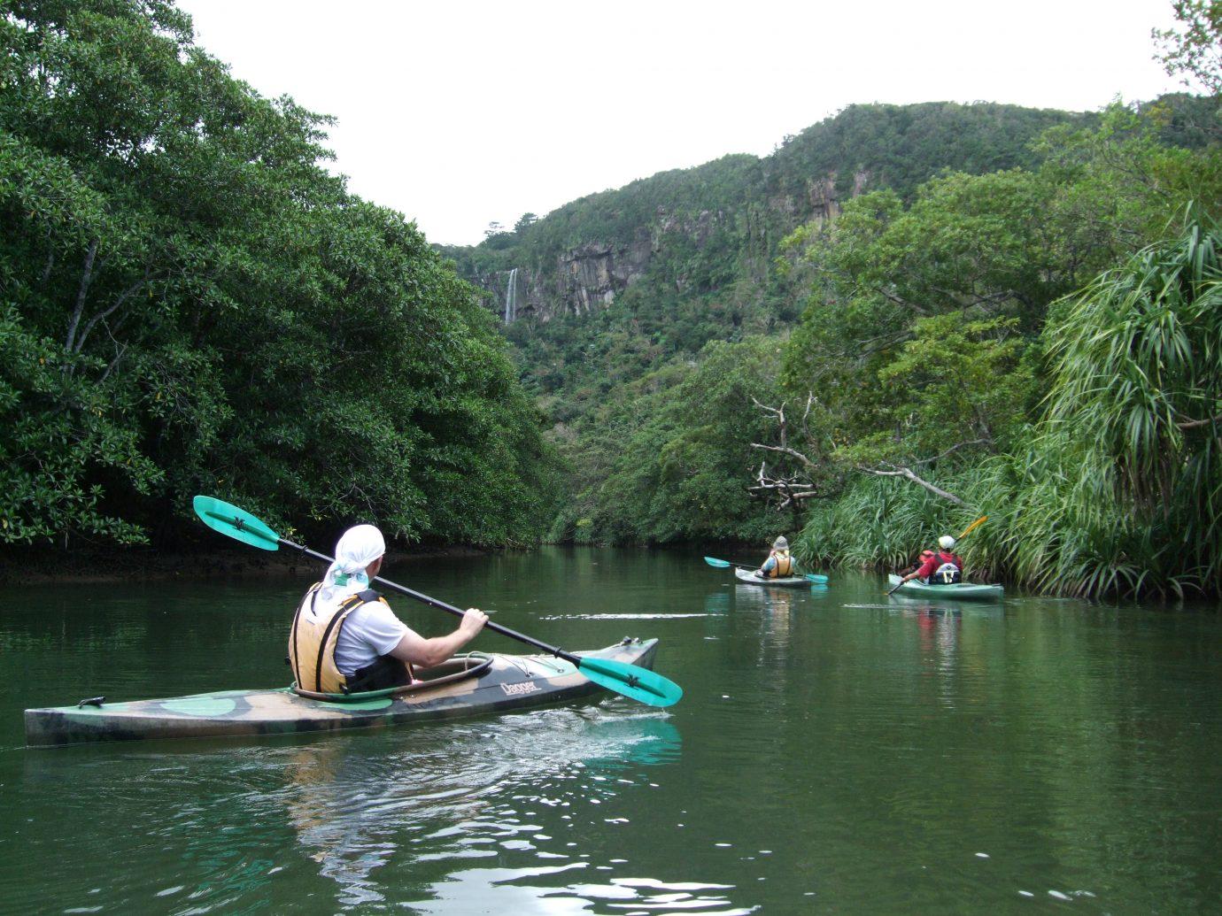 person kayaking through mangroves in Japan
