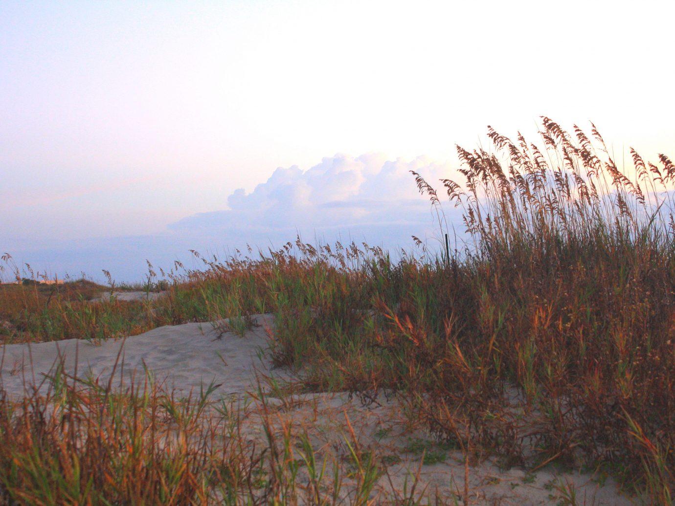 Sea oats wave against the sky on a sand dune on Jekyll Island, Georgia.