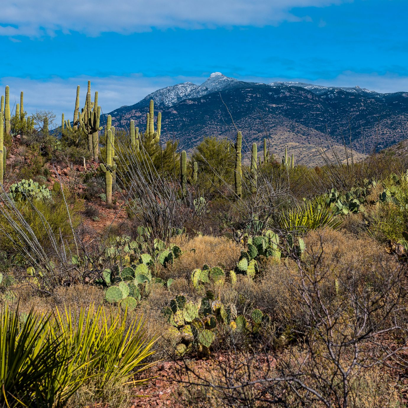 The Desert southwest in Arizona