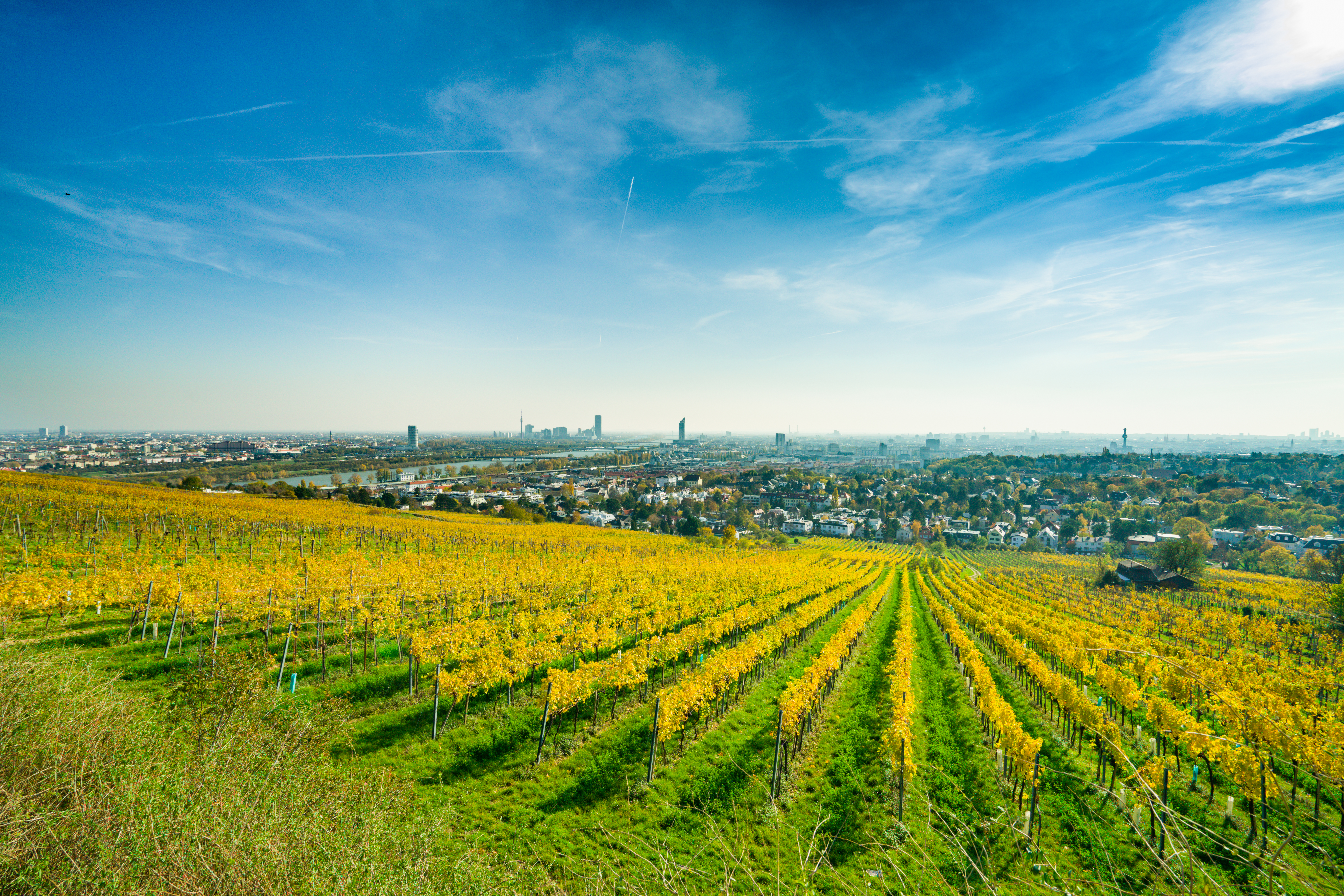 city of Vienna and colorful vineyards on sunny autumn day
