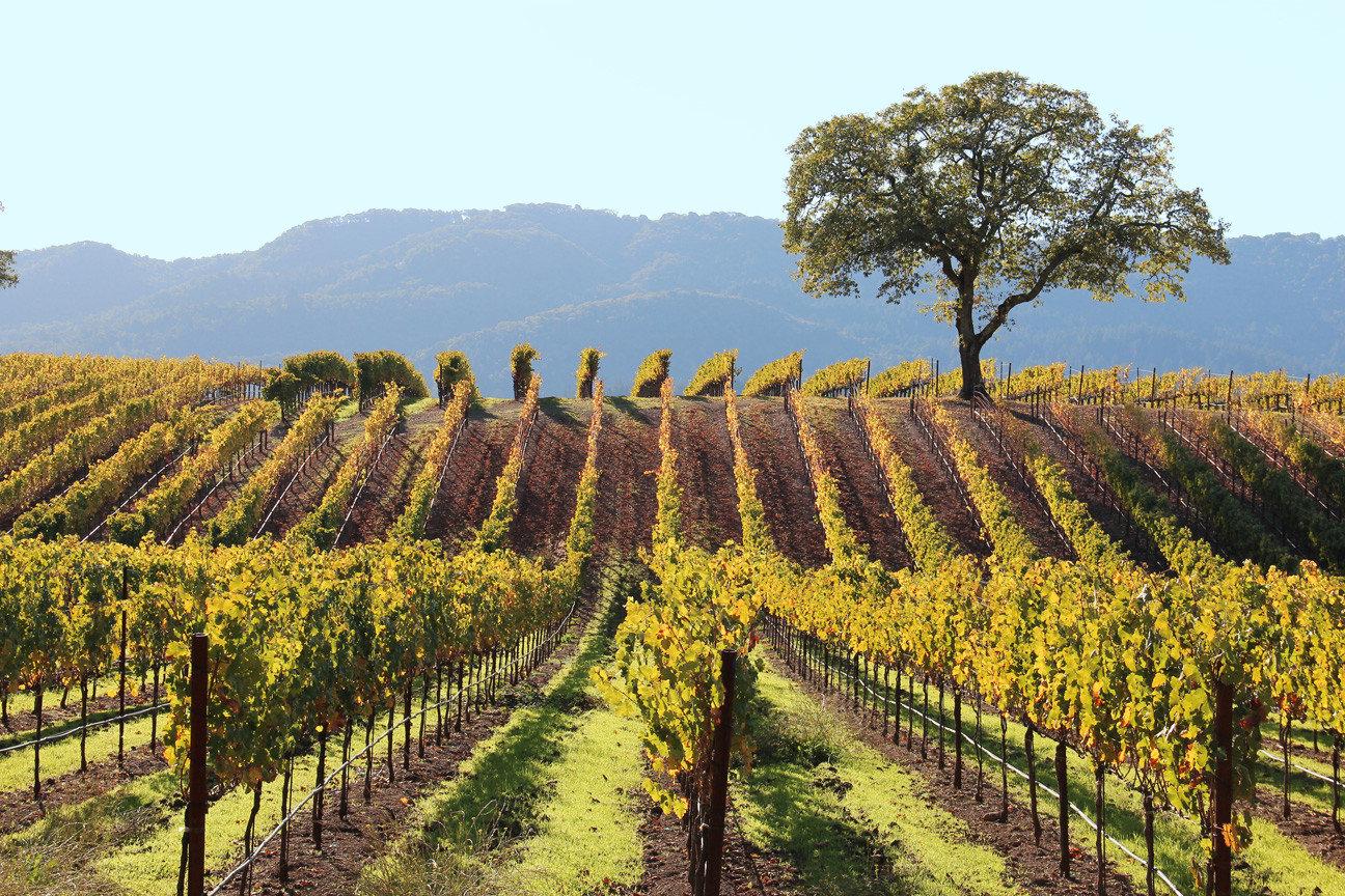 Winery in Sonoma California