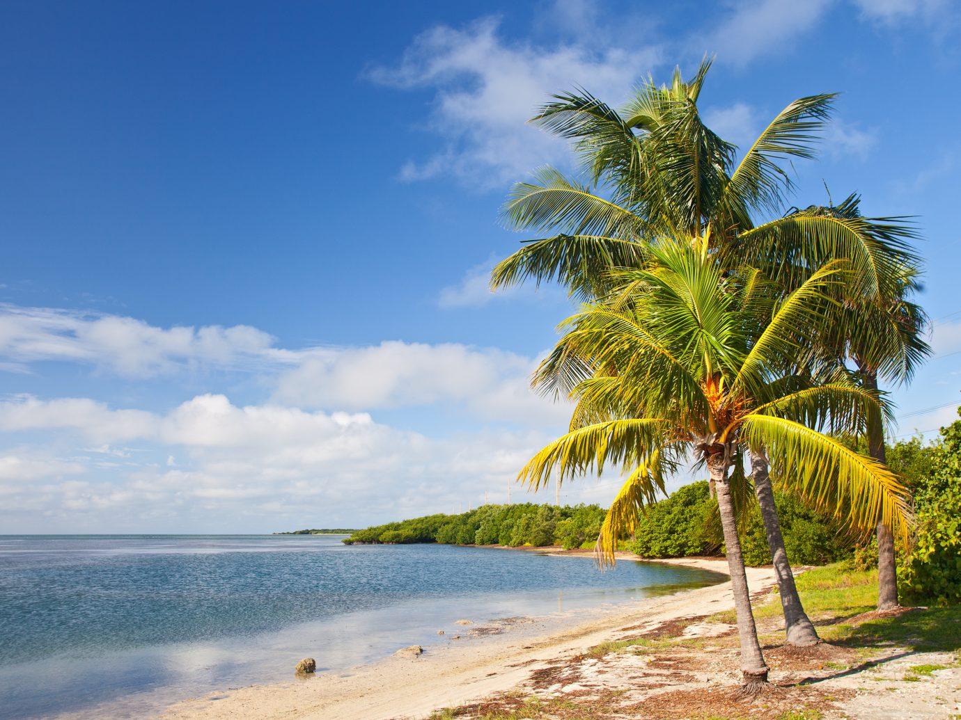 Palm trees, ocean and blue sky on a tropical beach in Florida keys near famous tourist destination Key West