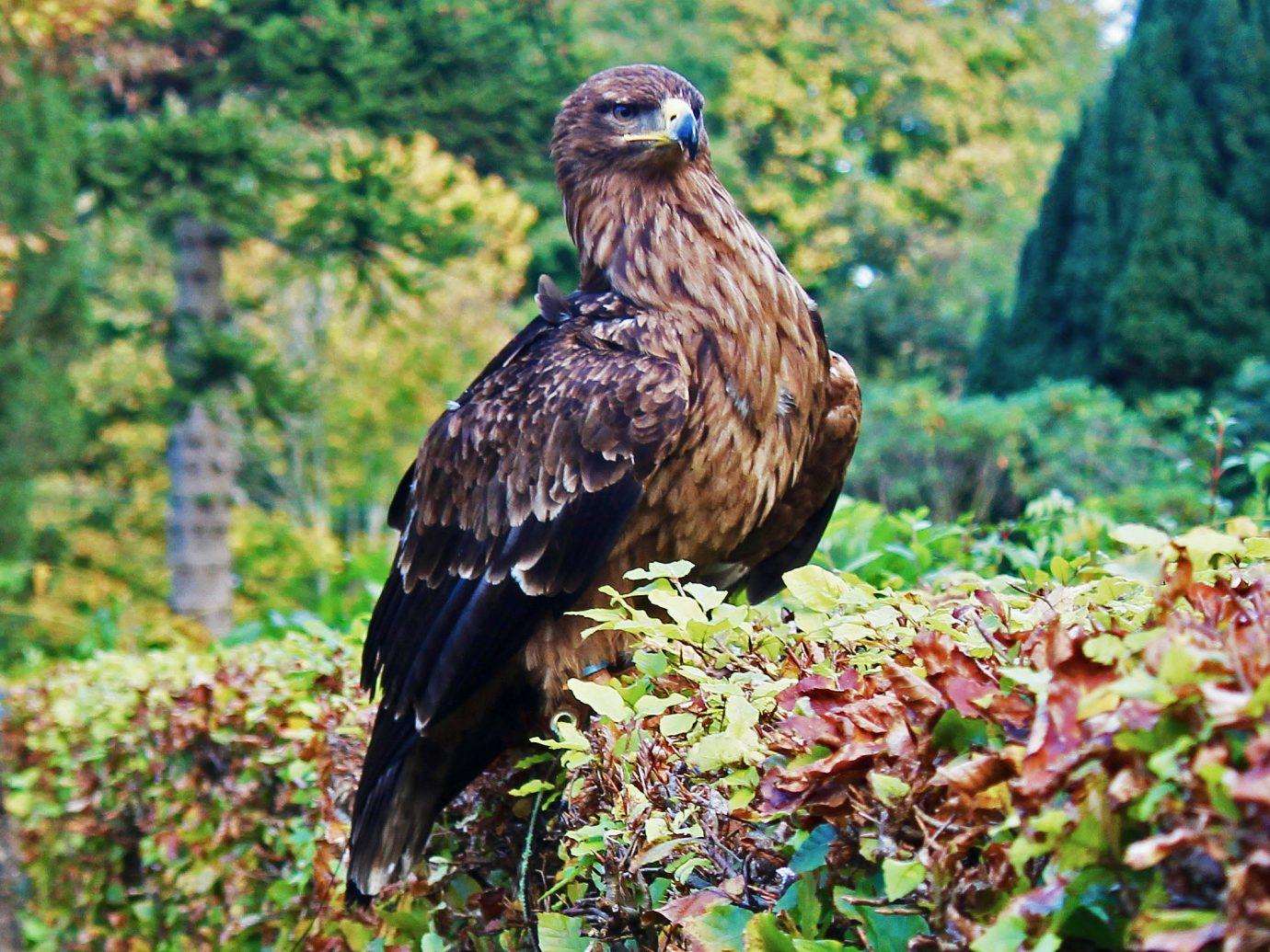 Falcon at Glenapp Castle