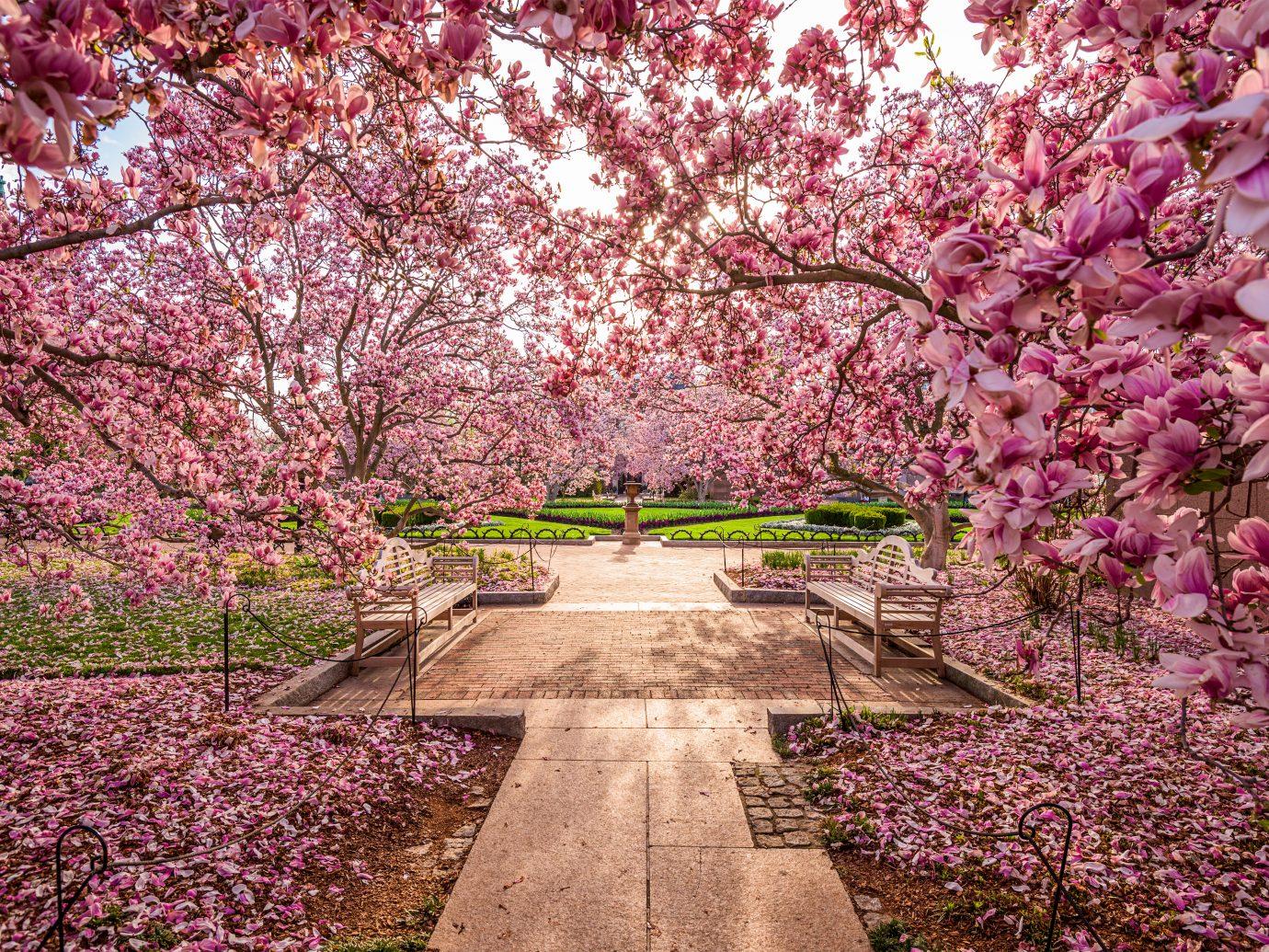 Washington DC garden off the National Mall during the spring season.