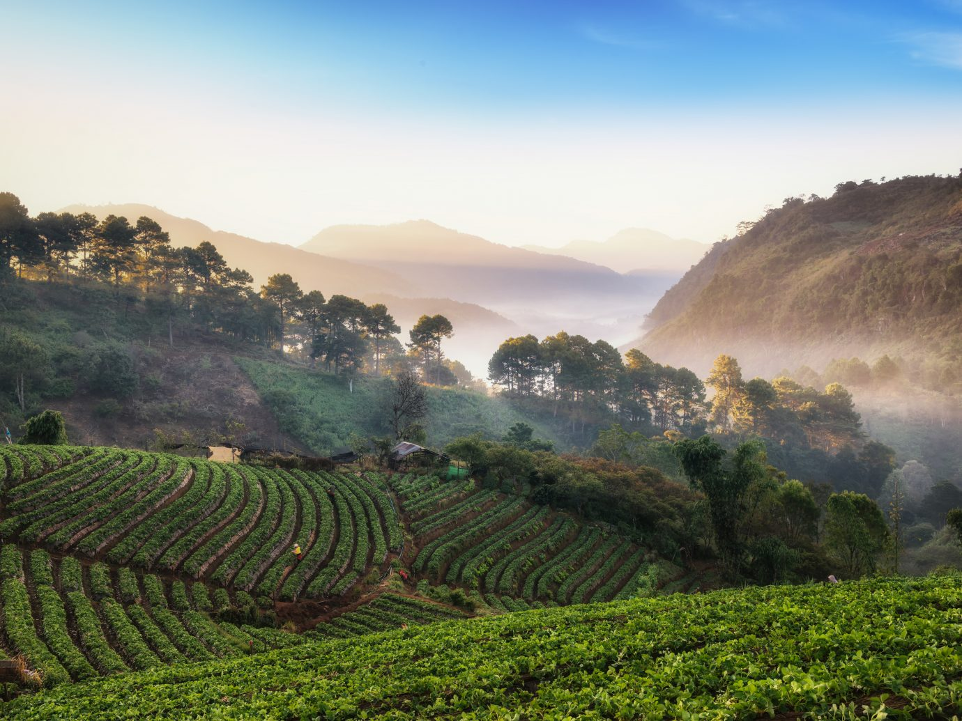 Beautiful misty morning sunrise in strawberry garden and strawberry farm at Doi Ang Khang , Chiang Mai, Thailand