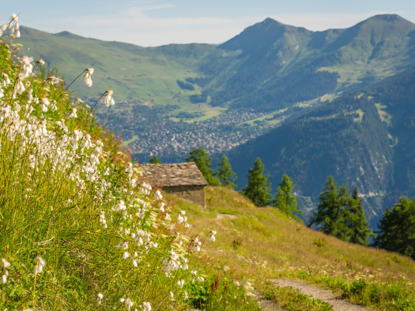 An alpine meadow bursting with wild flowers on the slopes of the mountains around Verbier in the Swiss alps.