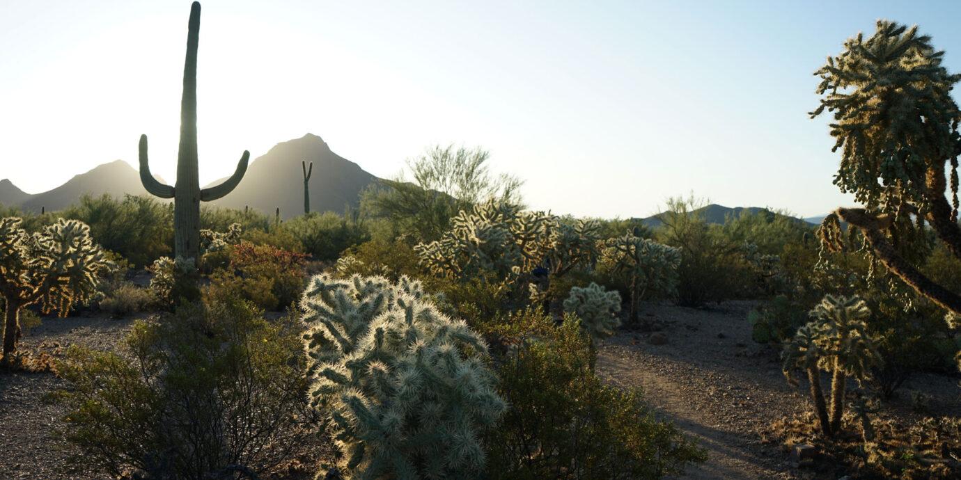 Gilbert Ray Campground, Tucson, AZ