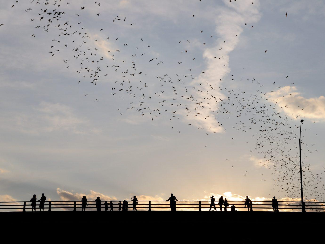 Trip Ideas sky flying outdoor flock cloud horizon morning dawn evening dusk sunlight Sunset bird migration animal migration day