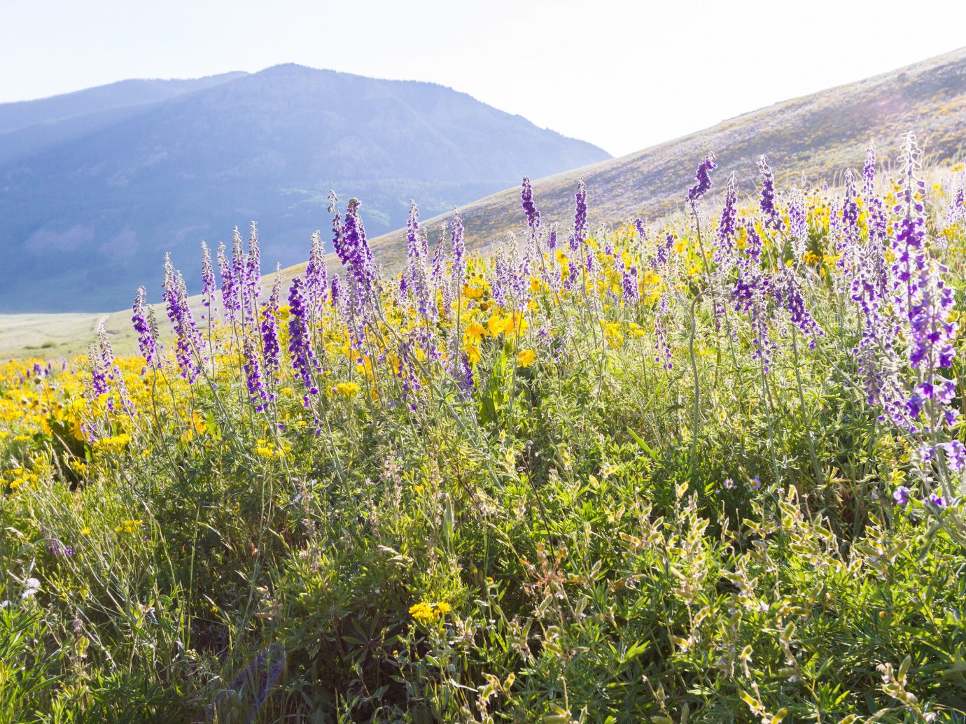 Trip Ideas outdoor sky mountain flower Nature plant flora natural environment grassland meadow prairie wildflower field grass land plant lupin rural area landscape flowering plant shrub tall
