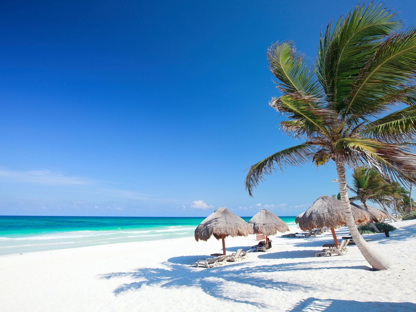 palm hut umbrellas on a sandy beach in Tulum