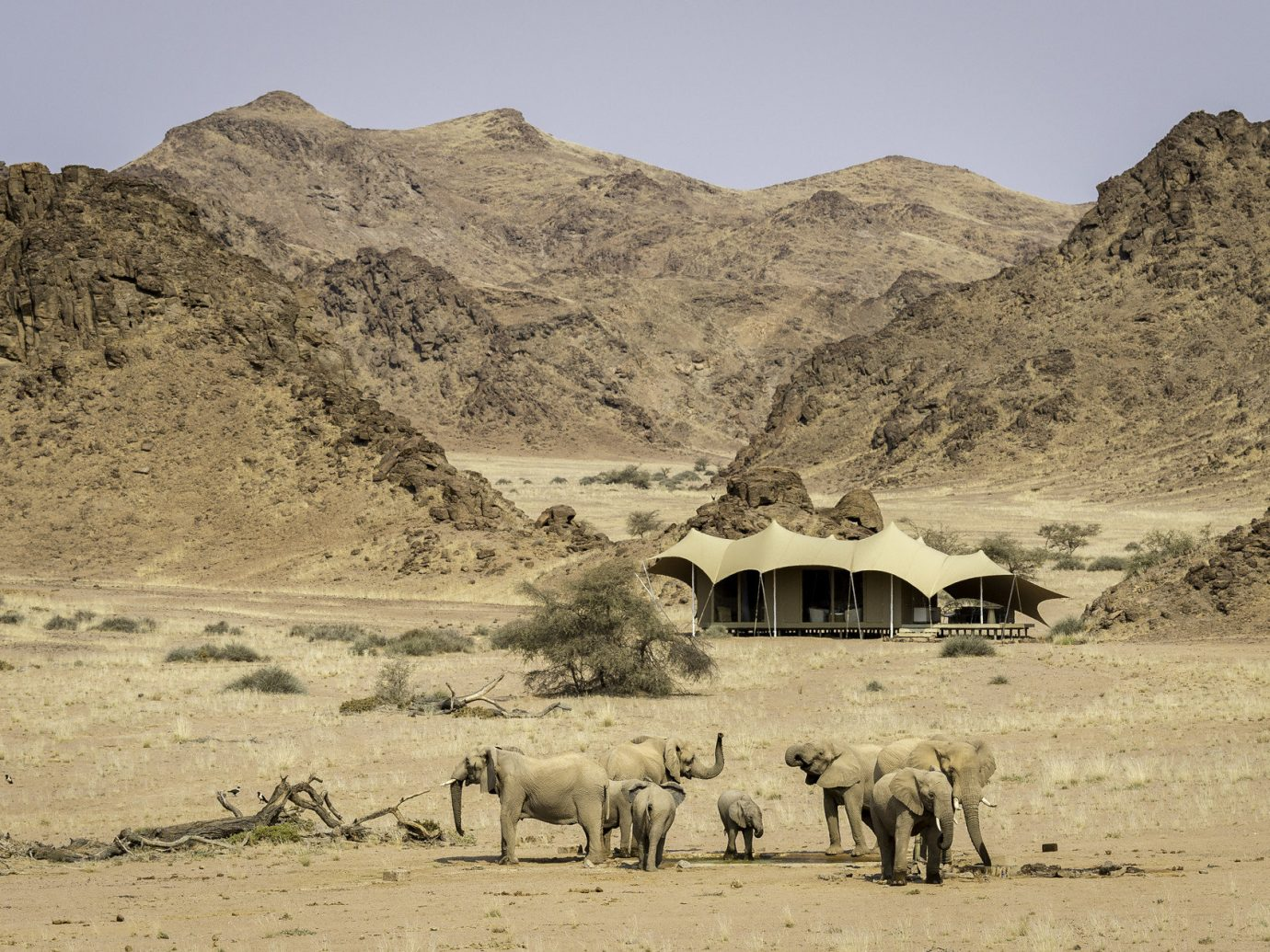 Spring Trips Trip Ideas outdoor mountain sky natural environment wilderness animal mammal wadi steppe Desert herd landscape aeolian landform plateau valley sand Camel Adventure sahara Safari dirt