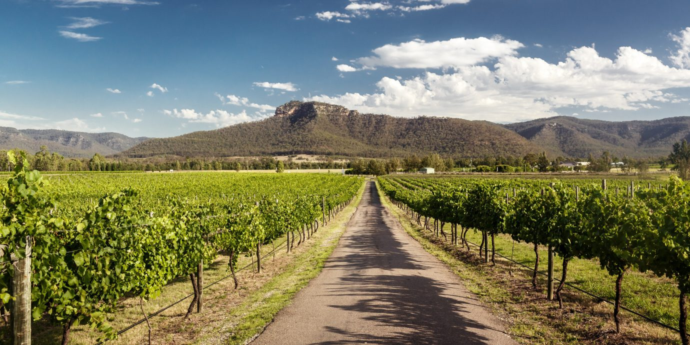 Trip Ideas agriculture sky Vineyard cloud tree mountain road field landscape hill plantation mount scenery