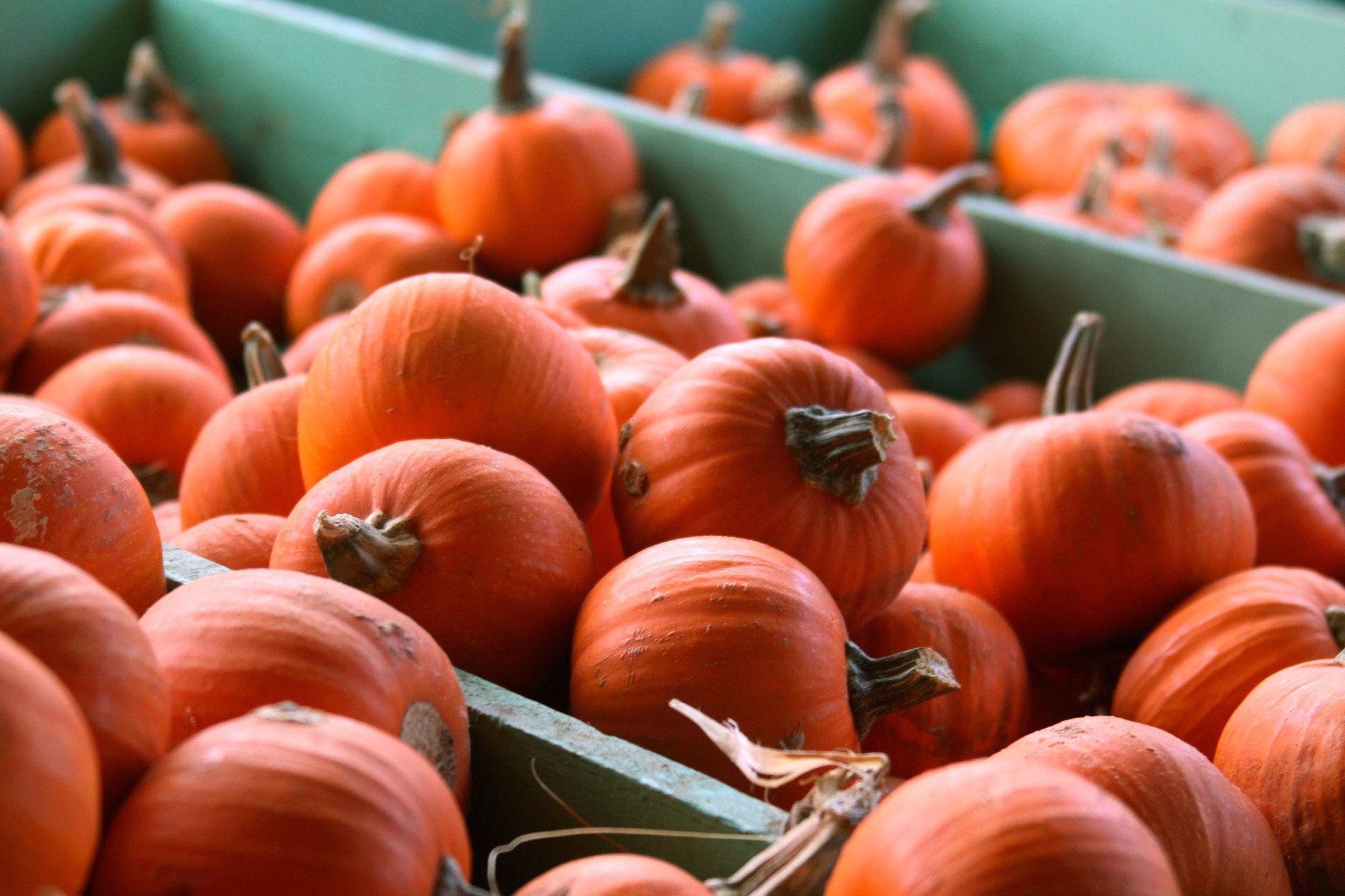 Offbeat fruit food produce plant squash pumpkin vegetable winter squash calabaza land plant flowering plant wooden oranges autumn sale fresh