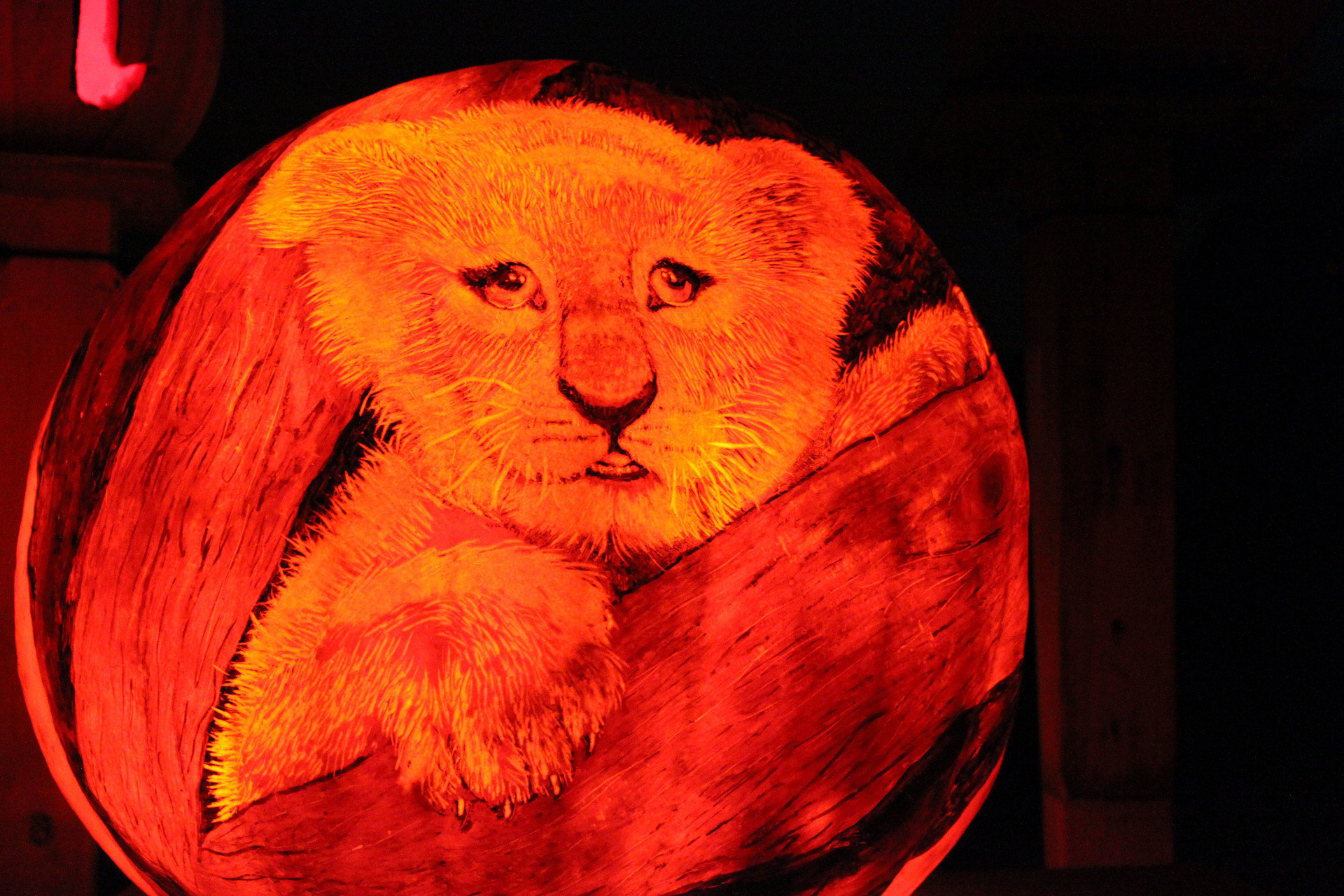 art artistic artsy Design festive glow halloween holiday lights night night lights orange pumpkins Trip Ideas color red indoor organ pumpkin macro photography human body
