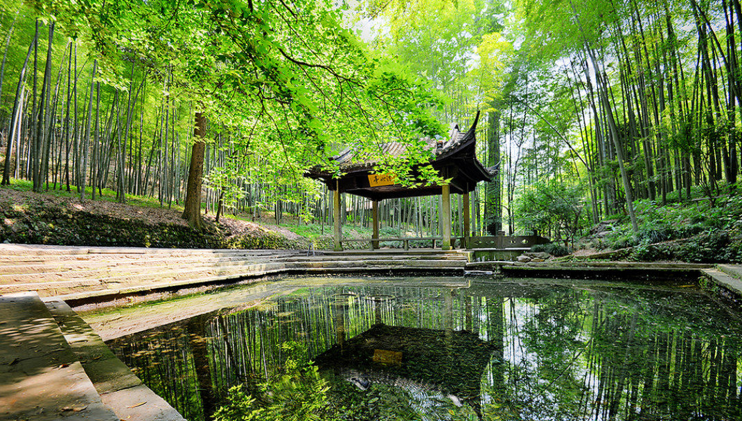 Food + Drink tree outdoor habitat Nature green reflection water natural environment botany woodland pond River stream Forest woody plant leaf wetland park Garden rural area flower wooden swamp waterway Jungle autumn rainforest area plant wooded wood surrounded lush