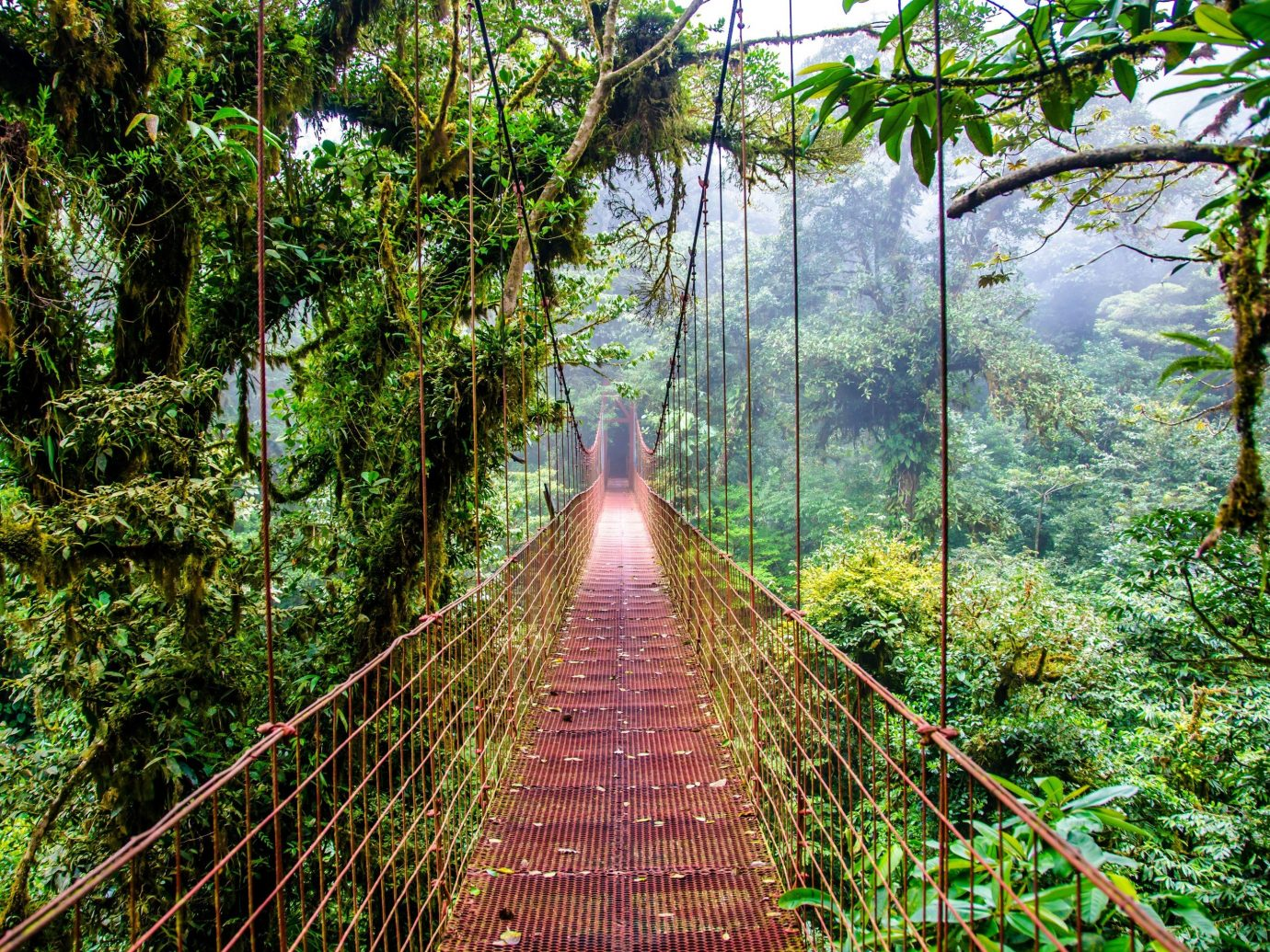 Trip Ideas tree outdoor habitat building bridge vegetation Nature rainforest natural environment Forest old growth forest botany Jungle woodland tropics plantation wooded surrounded lush