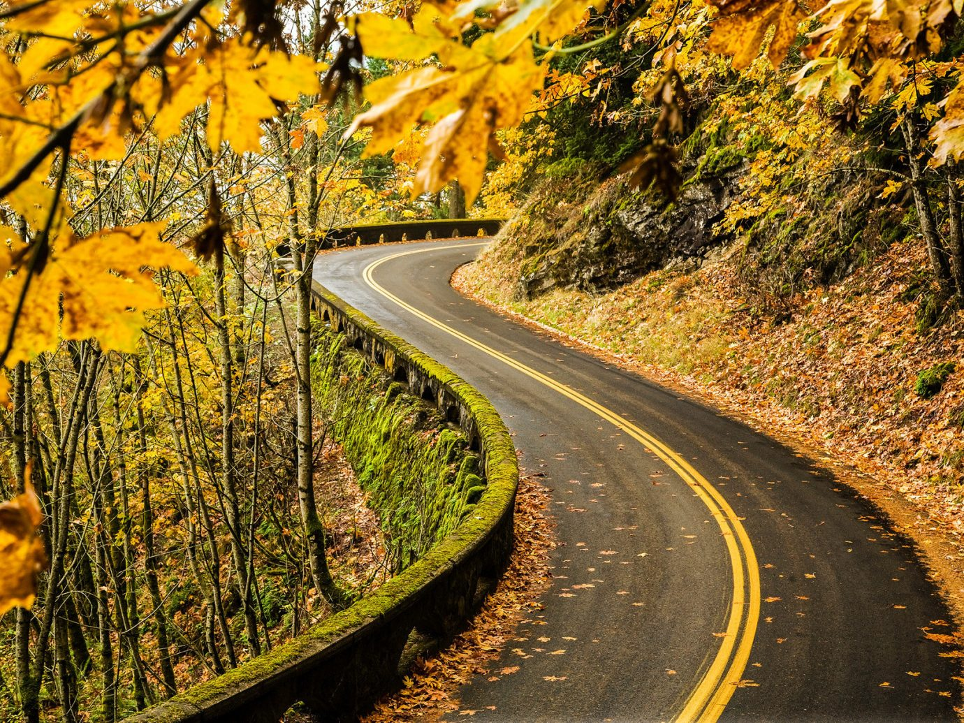 Jetsetter Guides Road Trips tree Nature outdoor road transport autumn season lane leaf plant track morning woody plant yellow infrastructure rural area landscape nonbuilding structure traveling wooded