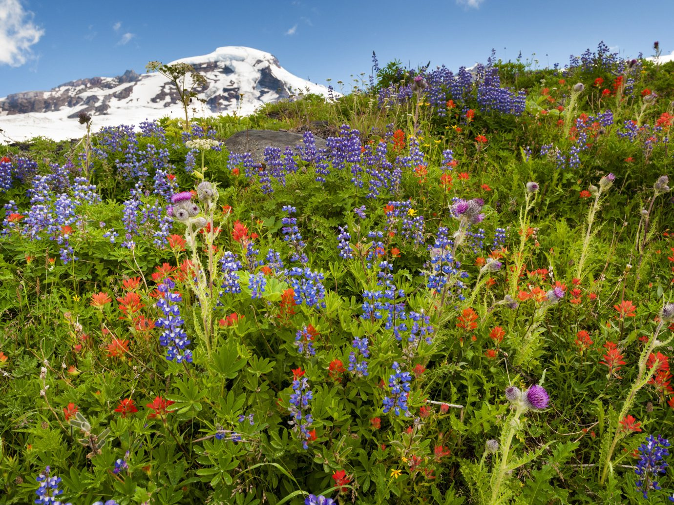 Trip Ideas sky flower outdoor habitat Nature vegetation flora meadow natural environment plant colorful ecosystem lupin grassland wildflower botany prairie land plant bluebonnet Garden woodland flowering plant shrub surrounded colored