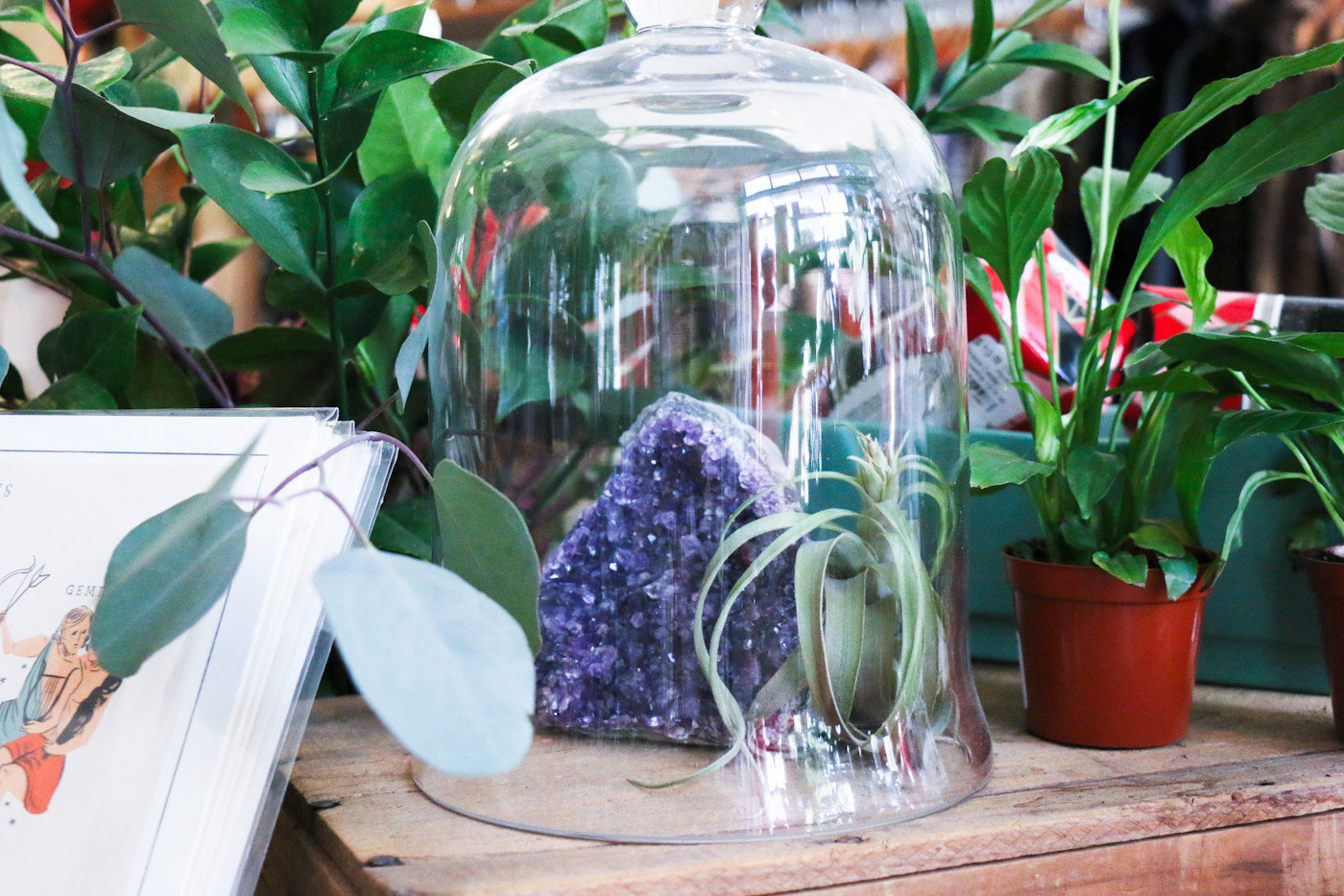 artistic artsy Boutique decor detail Hip hipster interior plants Shop shopping store Style + Design trendy table green plant floristry flower spring Garden glass bell jar fresh
