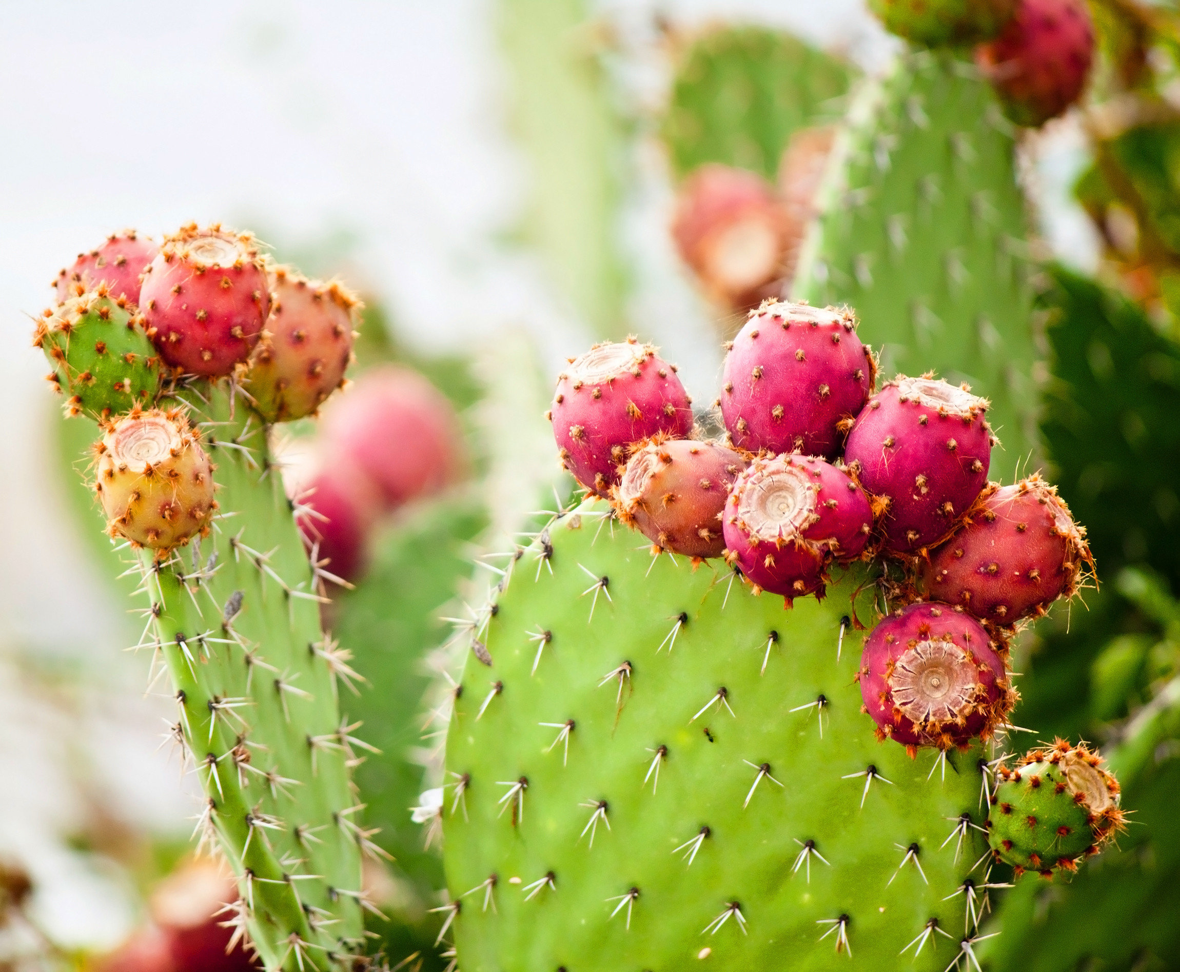 Offbeat Road Trips Style + Design Travel Trends Trip Ideas Plant Flora  Cactus Flower Prickly Pear