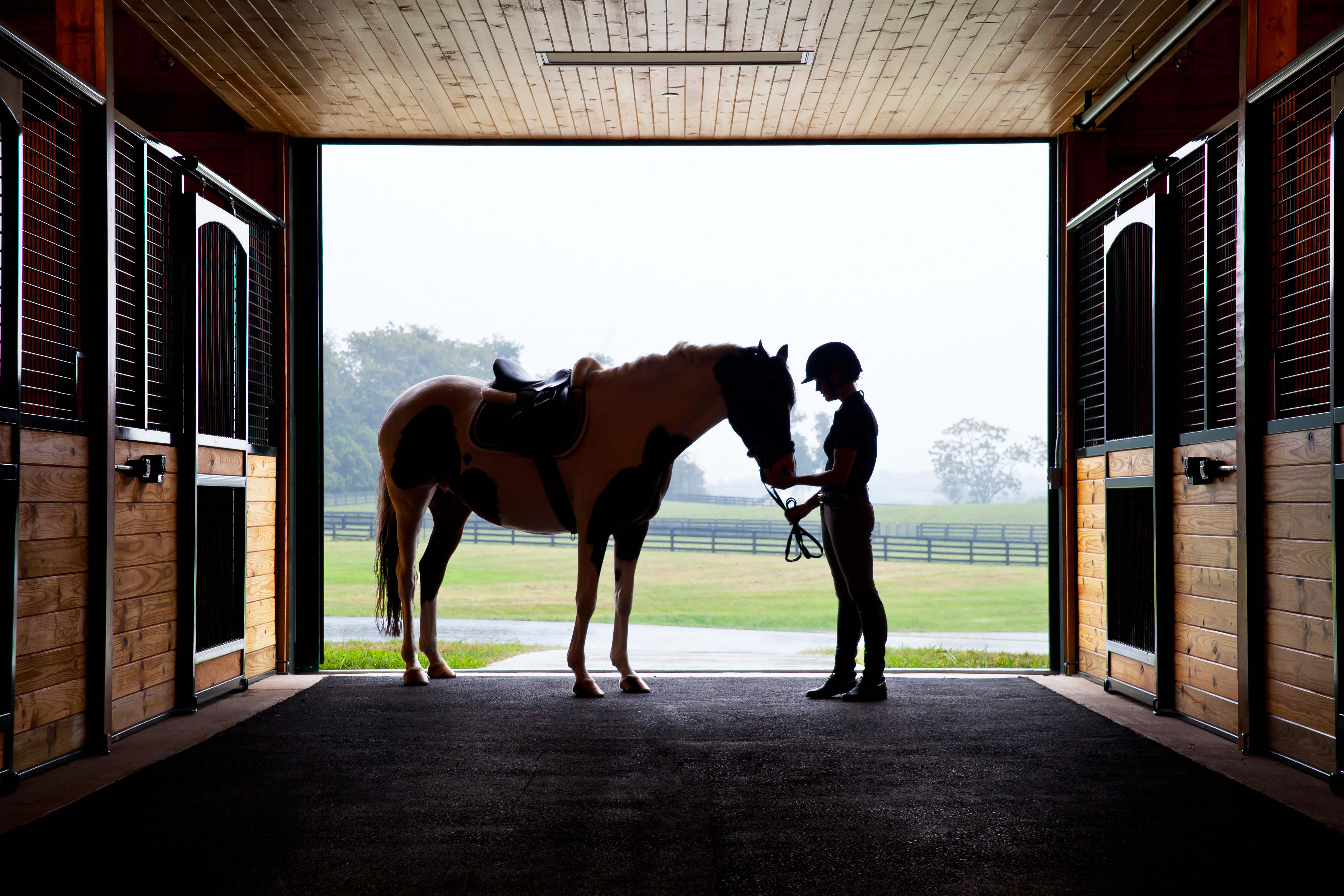 Country Outdoor Activities Ranch Resort Romance Trip Ideas Weekend Getaways photograph image horse like mammal stable horse