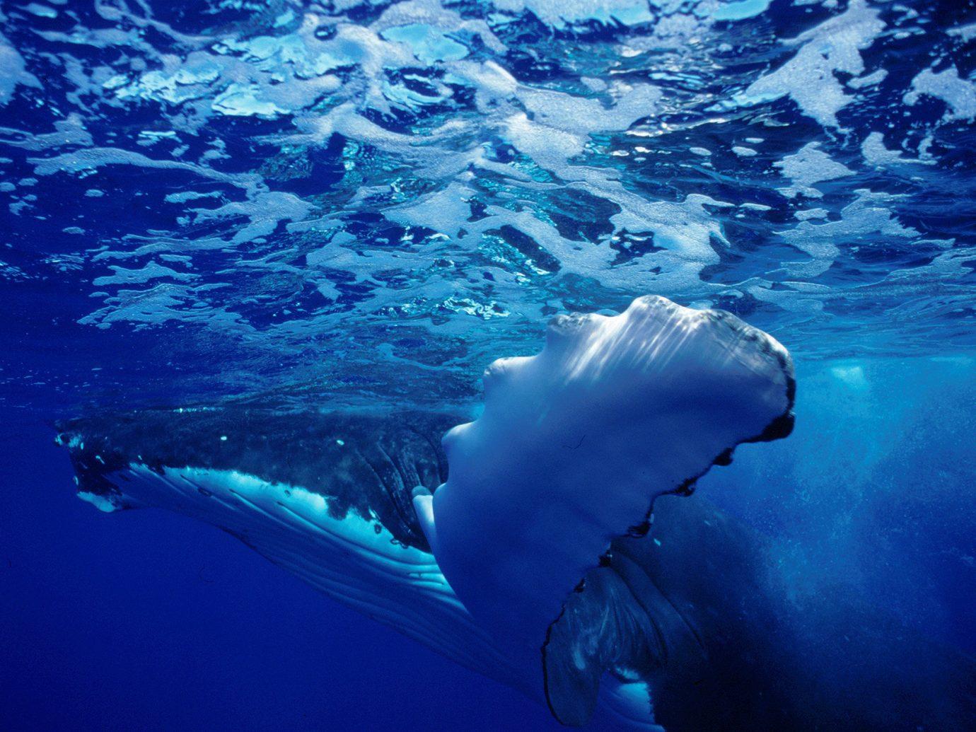 Islands Trip Ideas mammal vertebrate marine biology Ocean marine mammal biology whales dolphins and porpoises humpback whale whale Sea underwater common bottlenose dolphin ocean floor