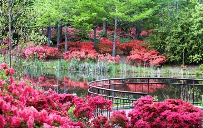 Offbeat tree outdoor flower grass Garden botany red plant pink land plant pond shrub botanical garden greenhouse flowering plant rhododendron backyard lawn Forest surrounded lush bushes colored