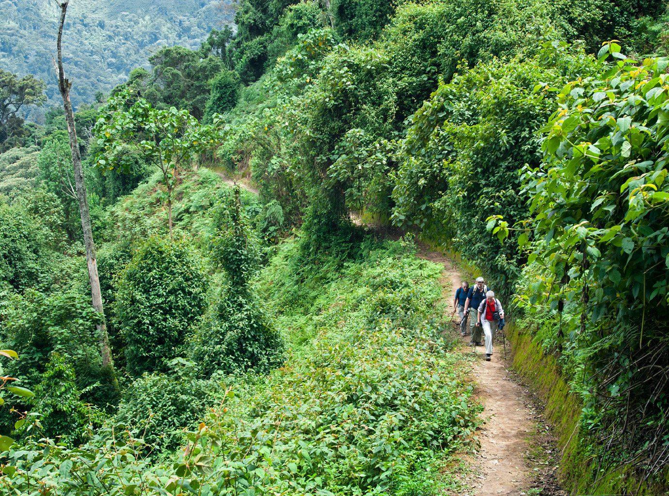 Rain Forest In Costa Rica