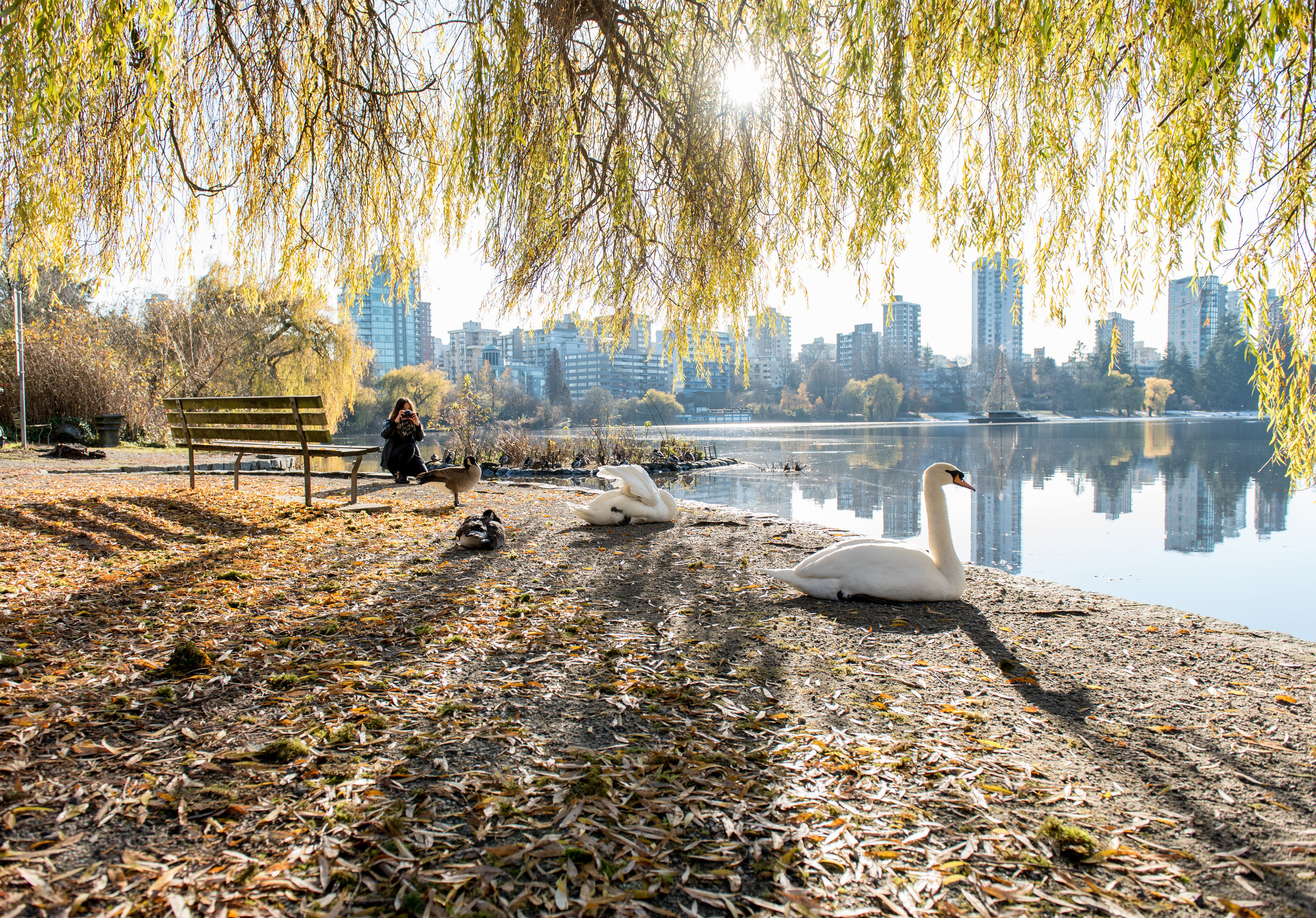 Health + Wellness Trip Ideas tree outdoor ground willow water plant Winter season autumn reflection morning leaf woody plant Forest sunlight landscape pond wetland Lake waterway day wooded
